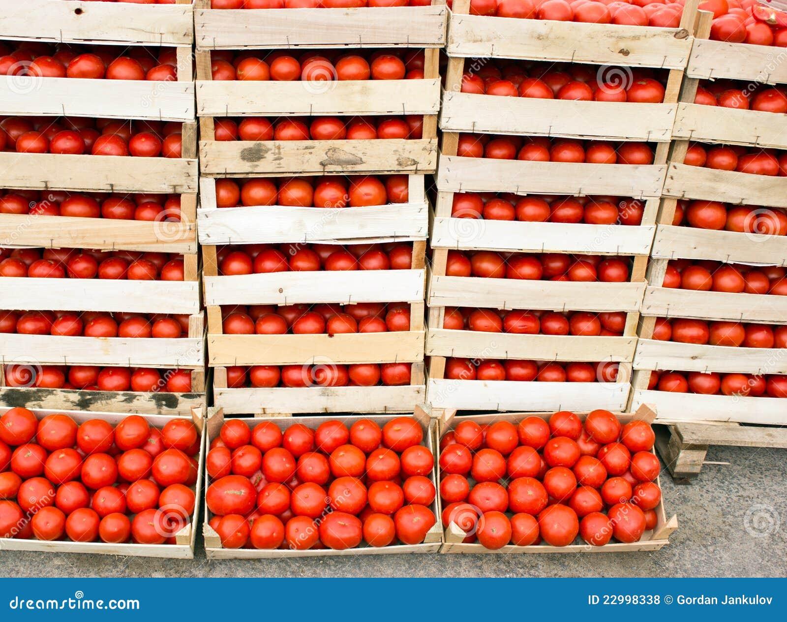 Tomate orgánico fresco en embalajes