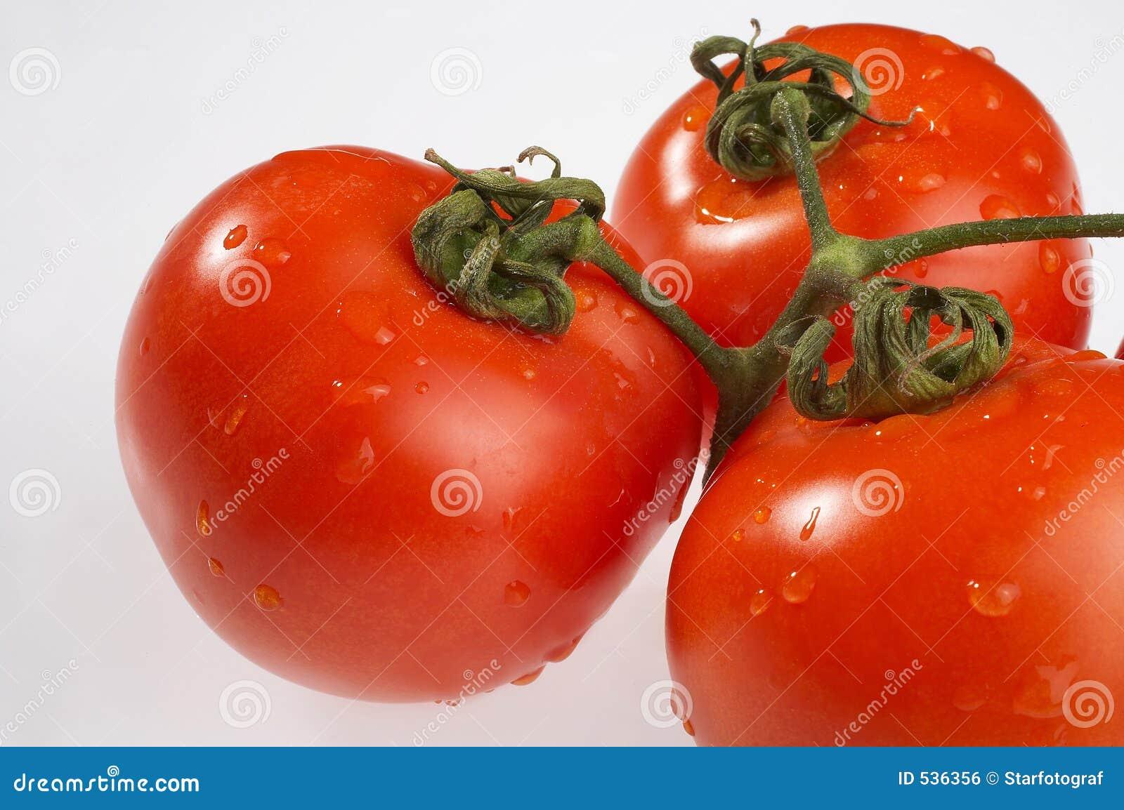 Download Tomaten蕃茄 库存照片. 图片 包括有 花梗, 腐烂, 埃森, 庭院, 生物, 素食者, 沙拉, 新鲜 - 536356