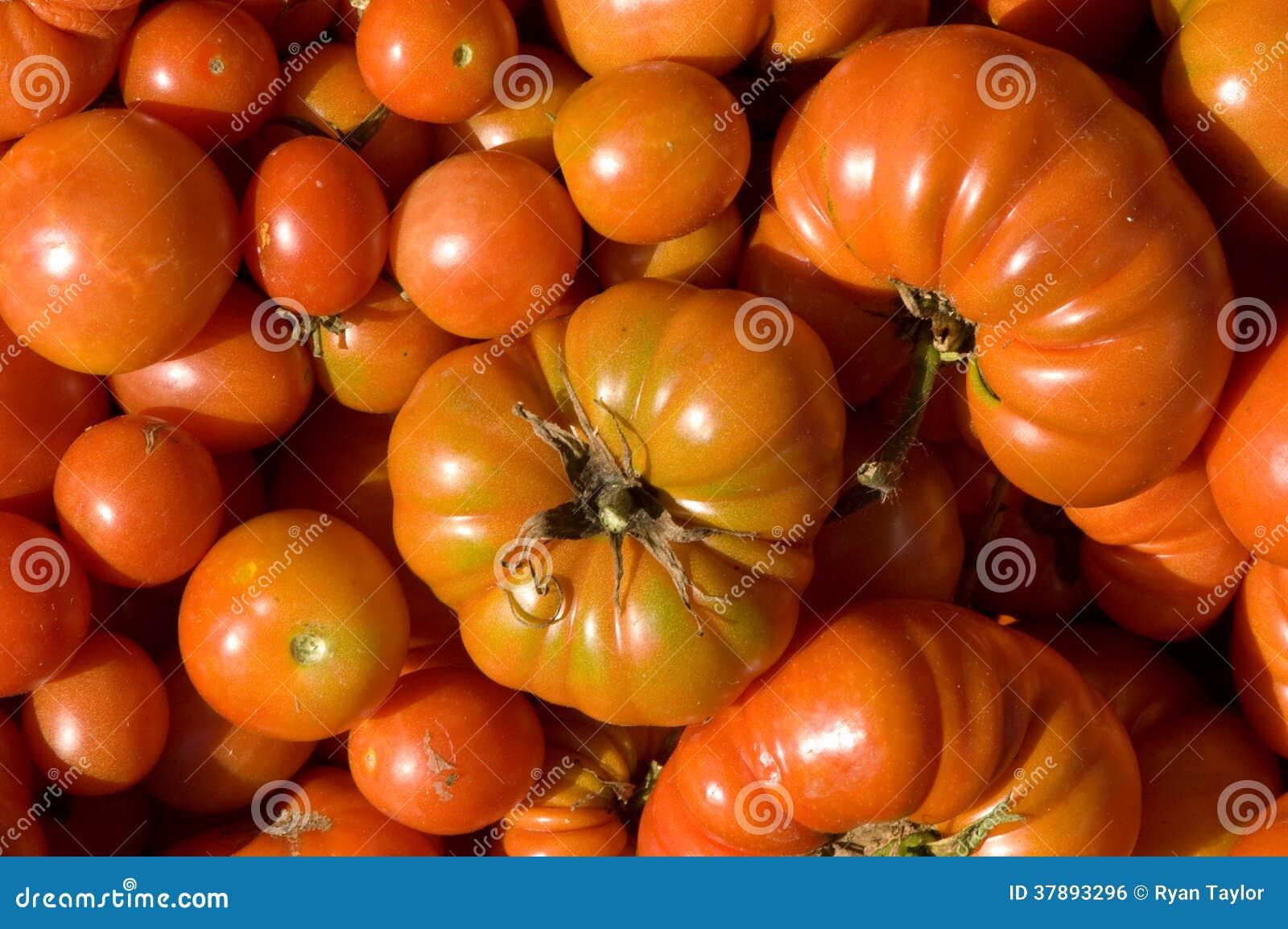 Tomaten Alle Vormen en Grootte