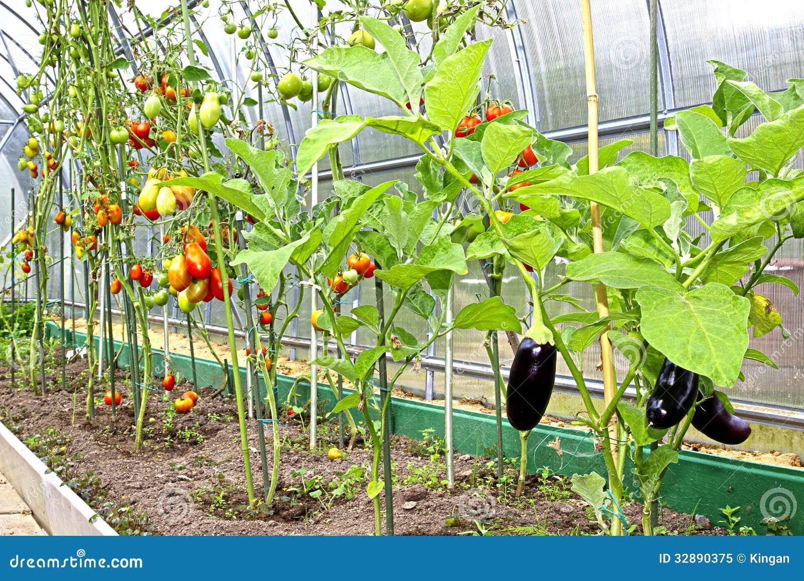 tomaten und auberginen stockbild bild von organisch 32890375. Black Bedroom Furniture Sets. Home Design Ideas