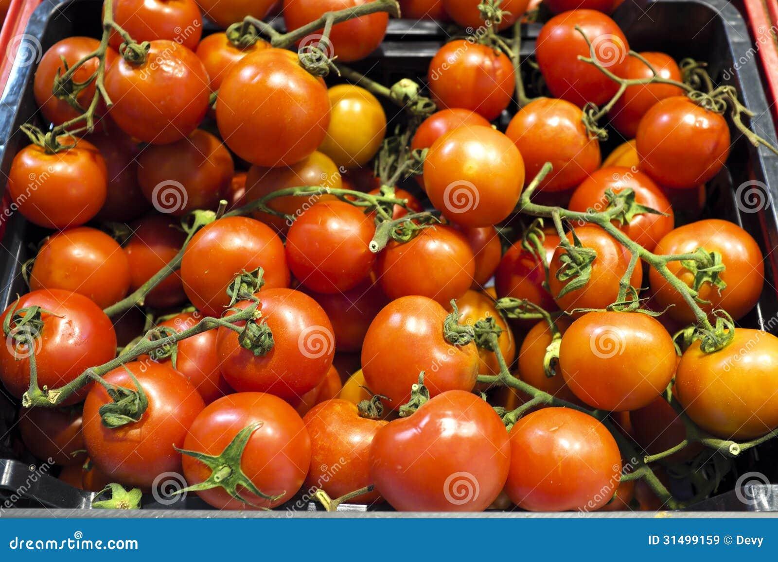 Tomater 0rganic i ett stånd