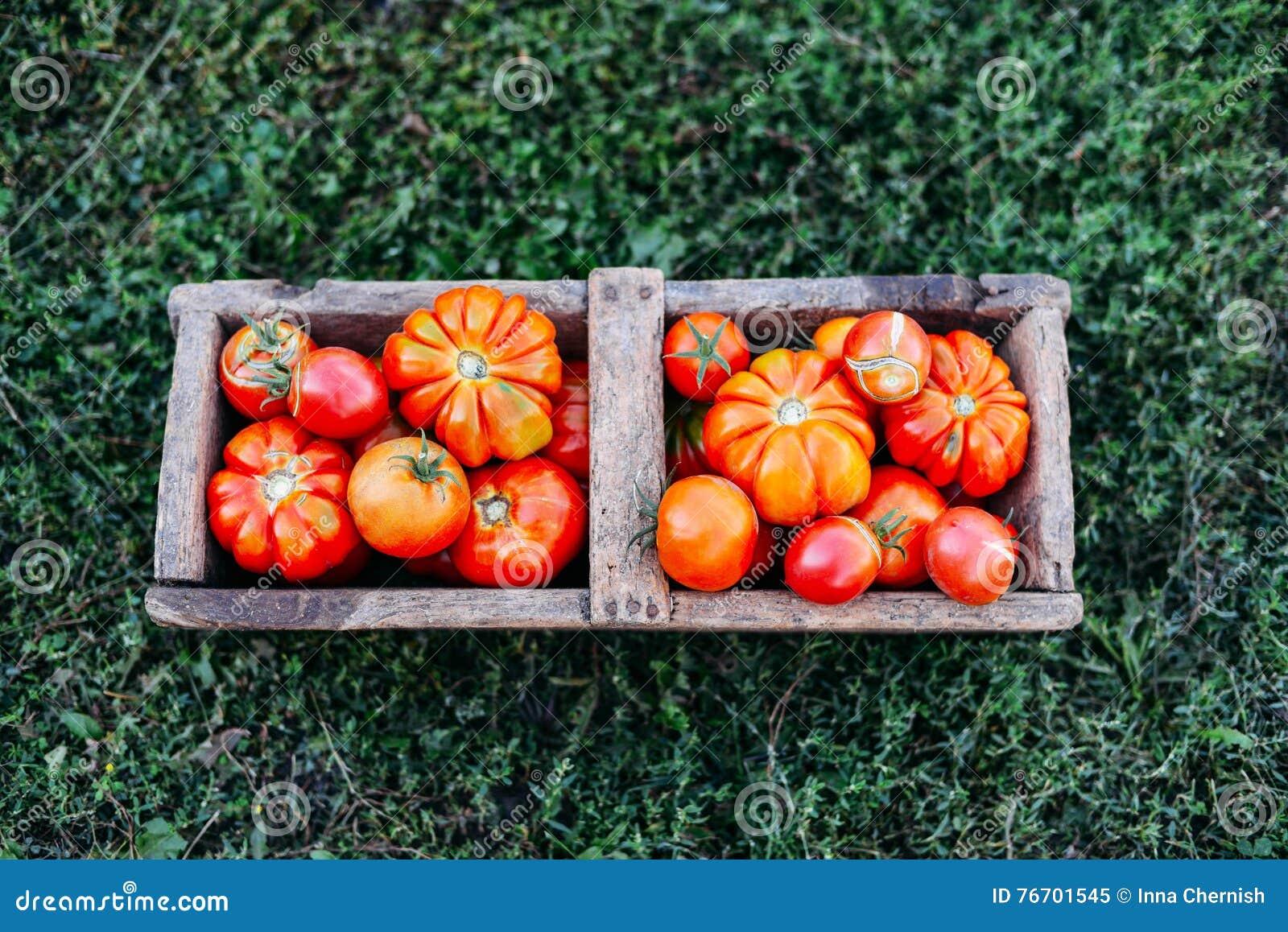 Tomates clasificados en bolsas de papel marrones Diversos tomates en cuenco