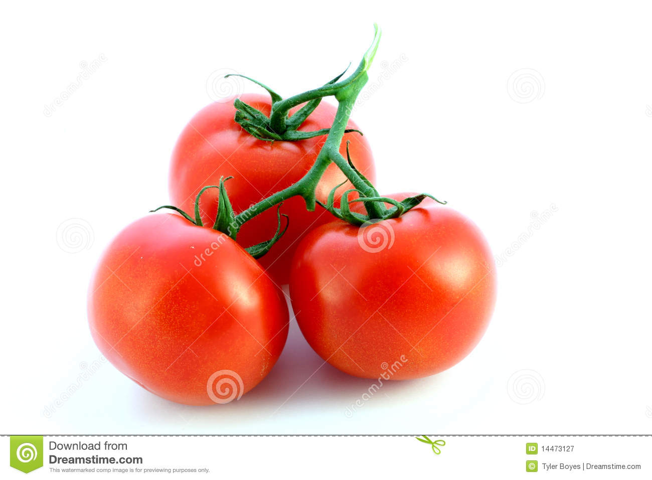 Tomates d isolement