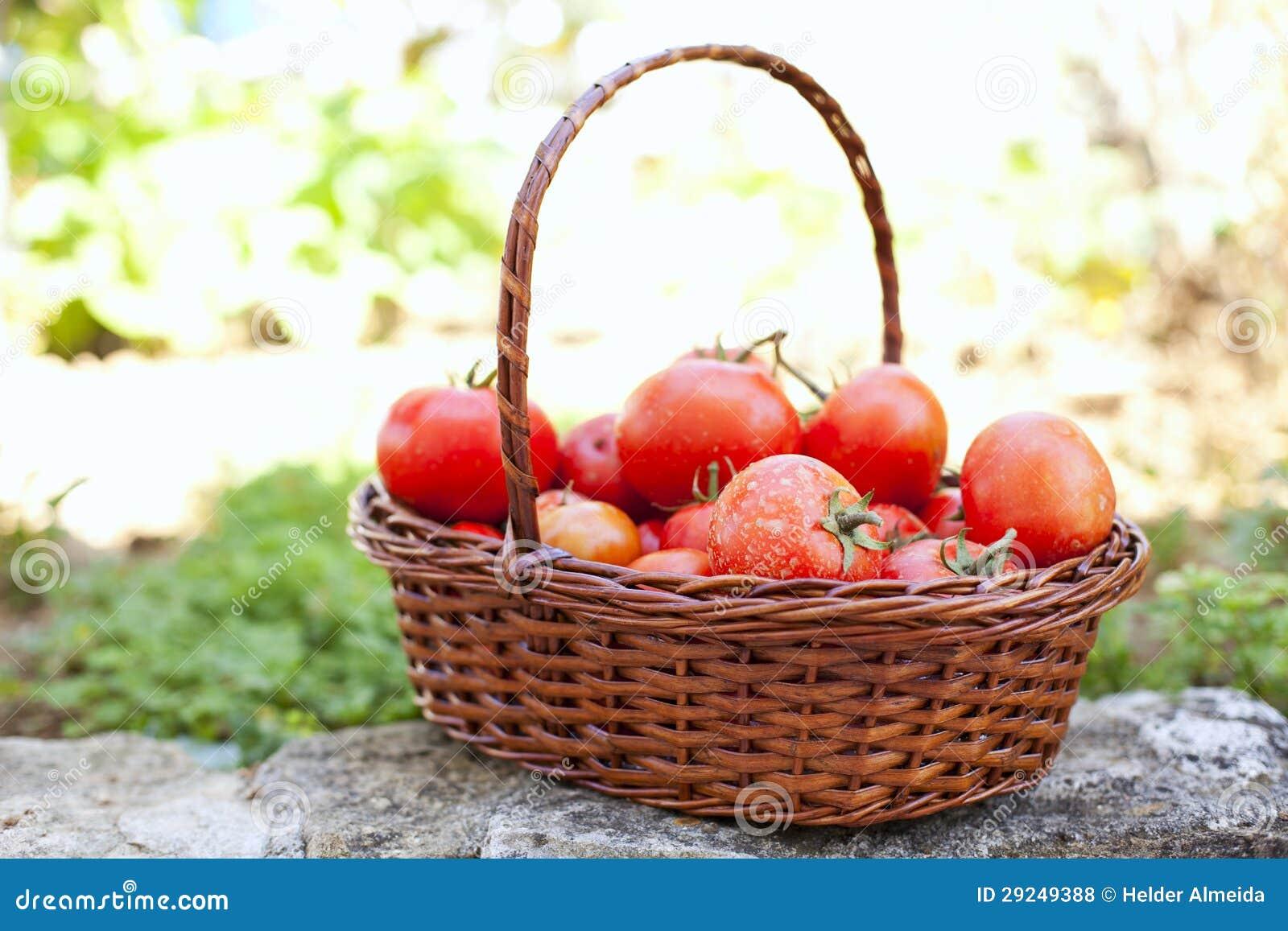 Download Tomates Da Exploração Agrícola Foto de Stock - Imagem de fresco, gramado: 29249388