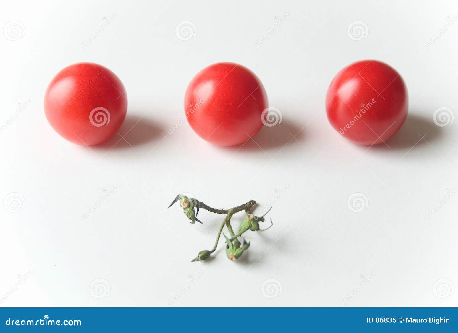 Tomates dans une ligne