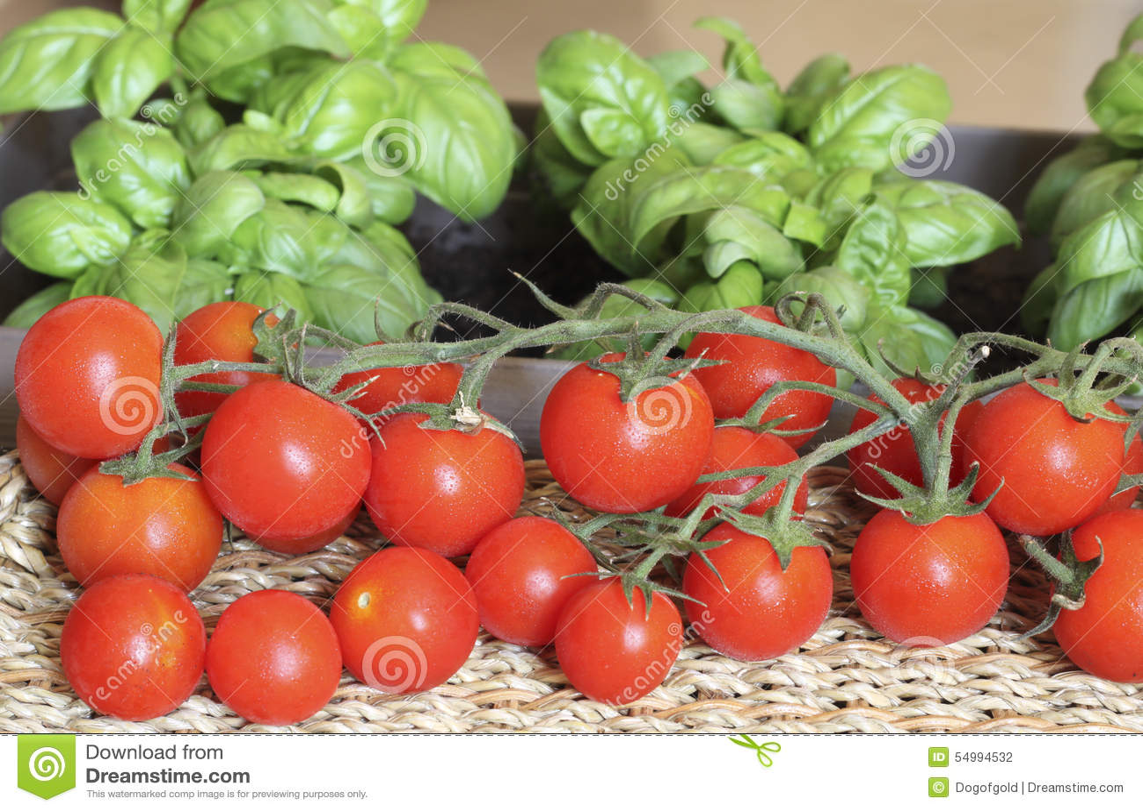 Tomates de Pachino e manjericão Genoese