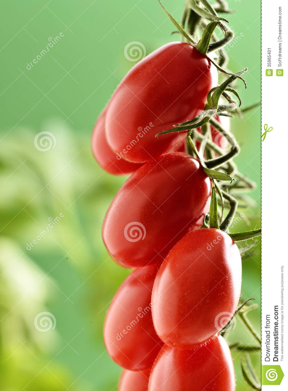 Tomates de Piccadilly