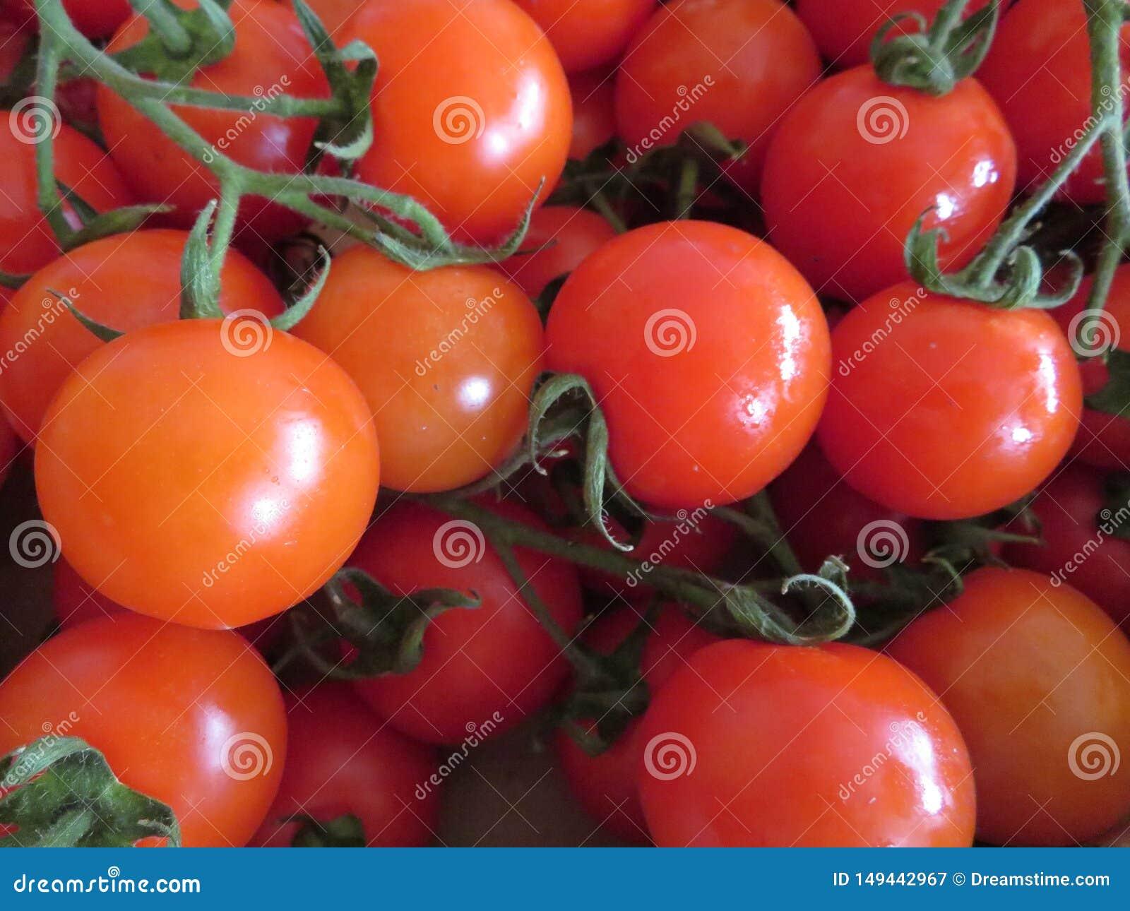 Tomates deliciosos com bons olhares e cor incr?vel
