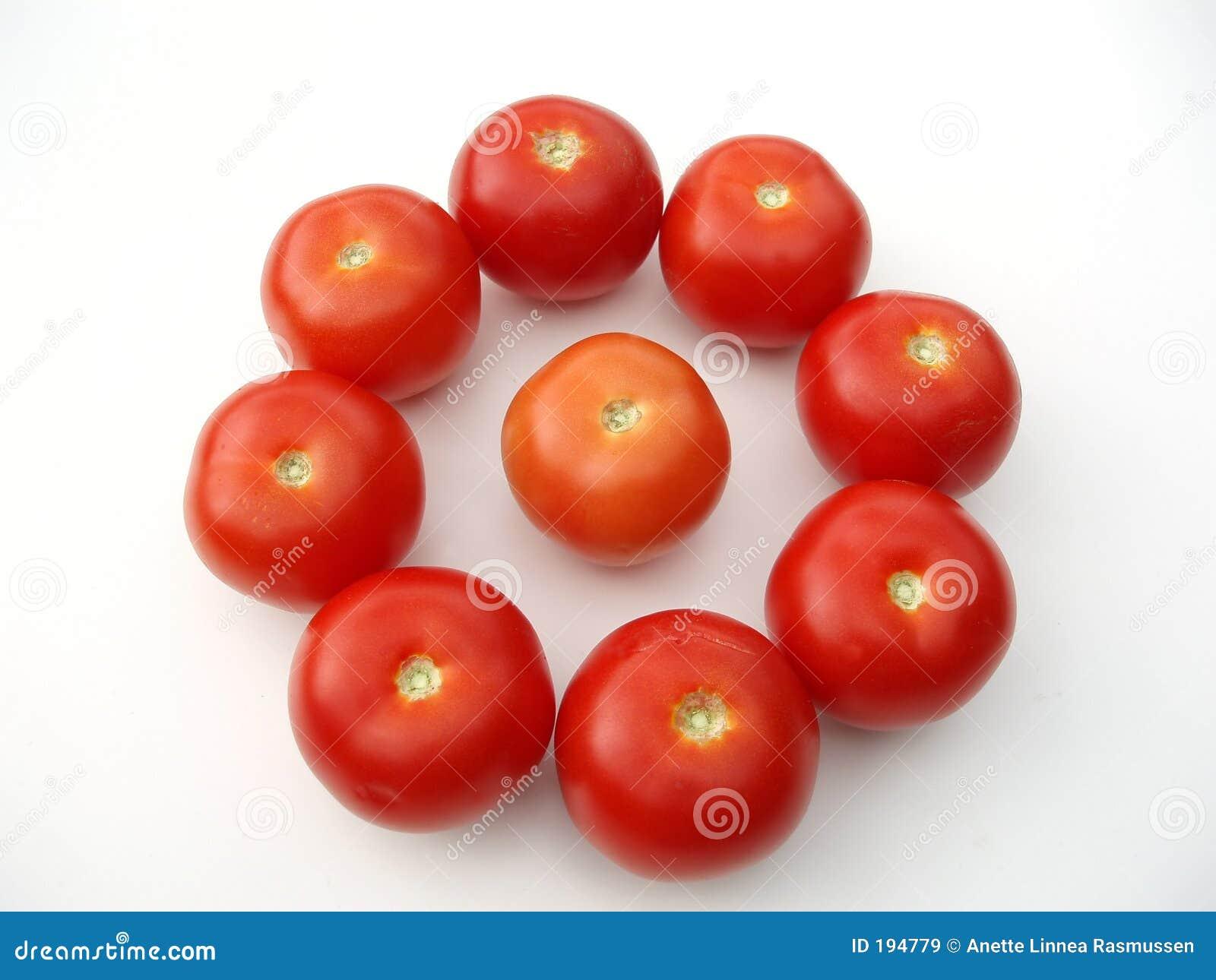 Tomates en cercle