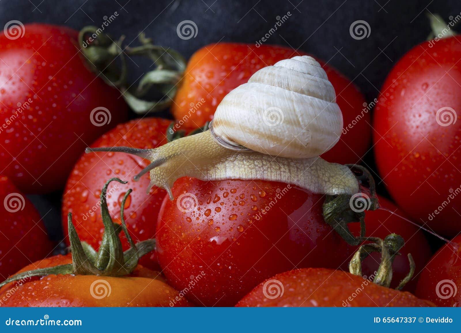 Tomates et escargot