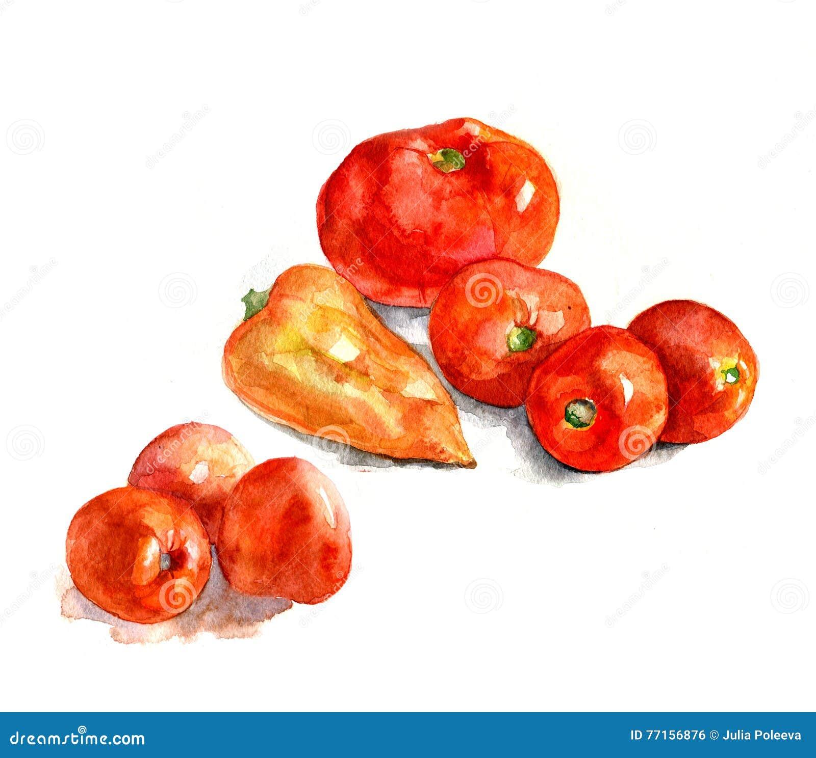 Tomates et poivre, aquarelle, réalisme