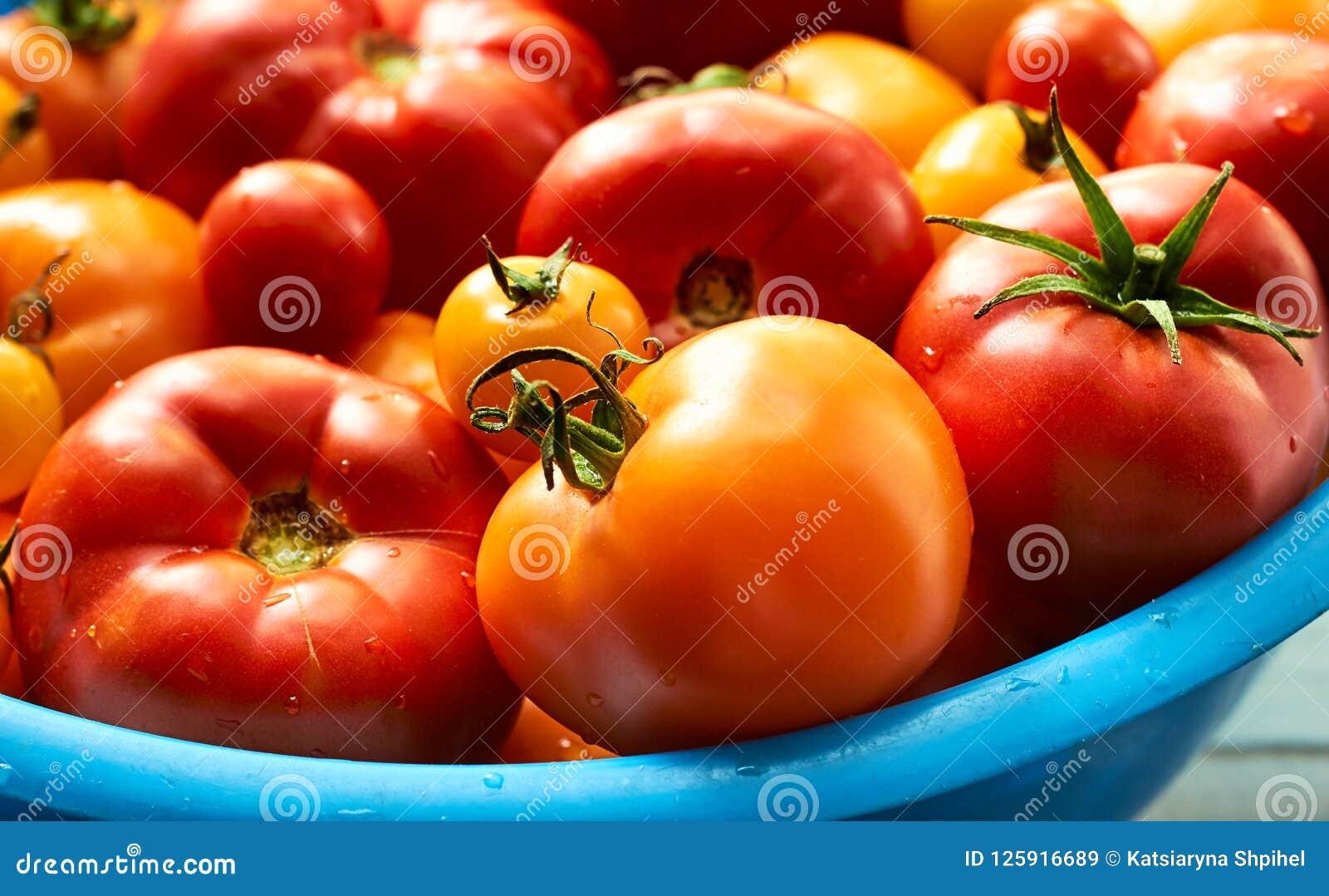 Tomates fraîches, rouge et jaune, avec des gouttes de l eau dans la grande cuvette bleue