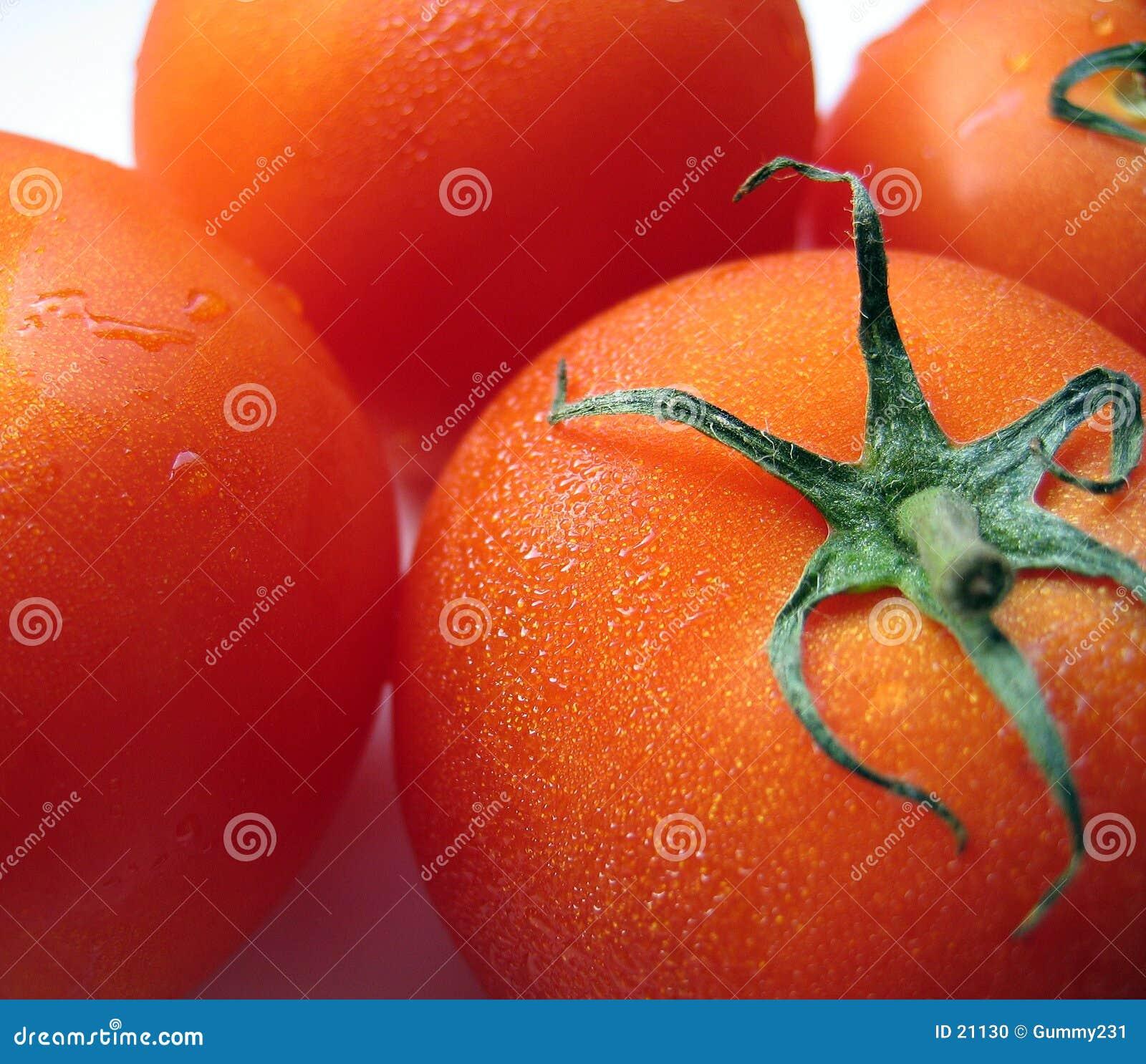 Tomates maduros regordetes