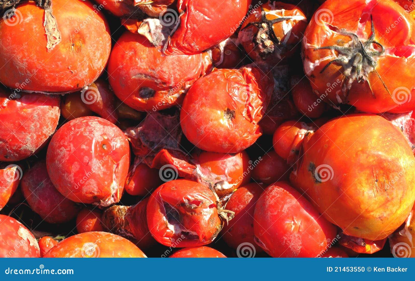 Tomates putréfiées