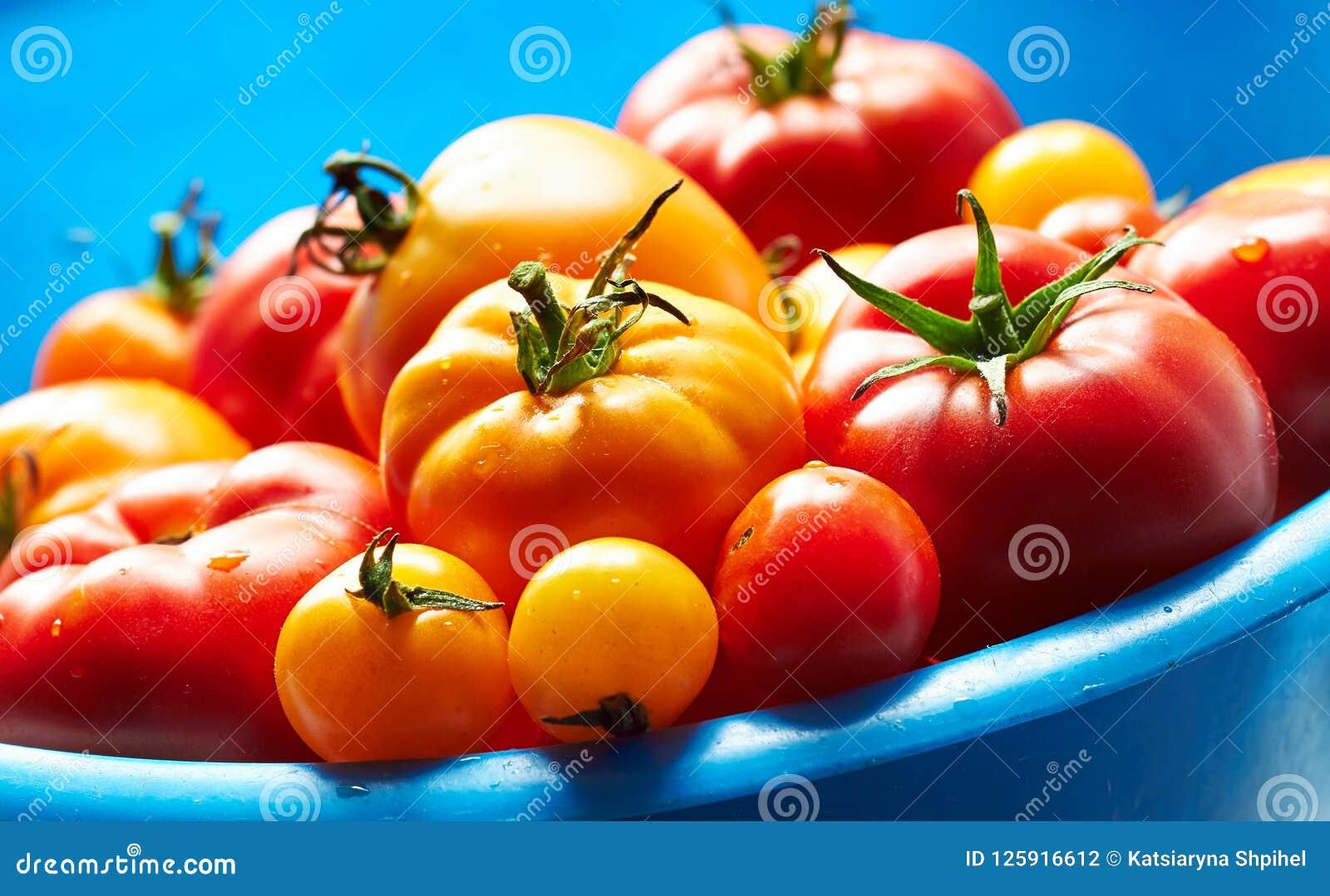 Tomates rouges et jaunes dans la grande cuvette bleue