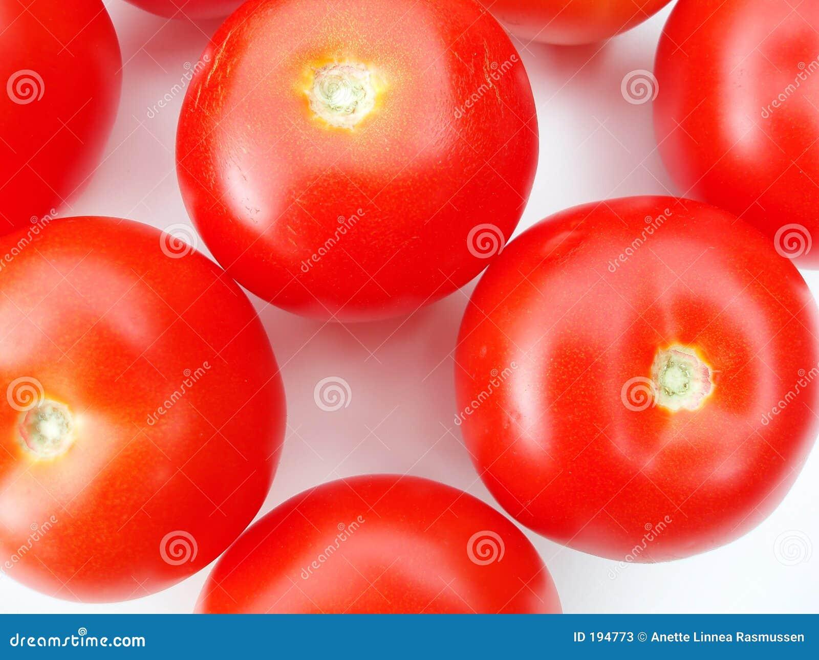Tomates sur le fond blanc