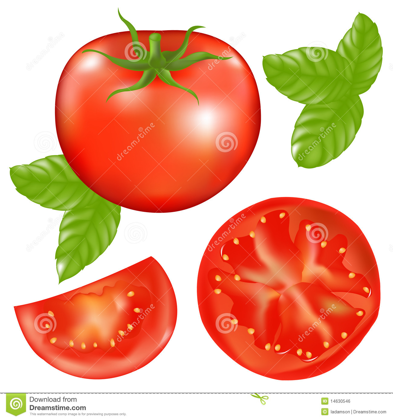 Tomato With Basil. Vector Royalty Free Stock Image - Image ...