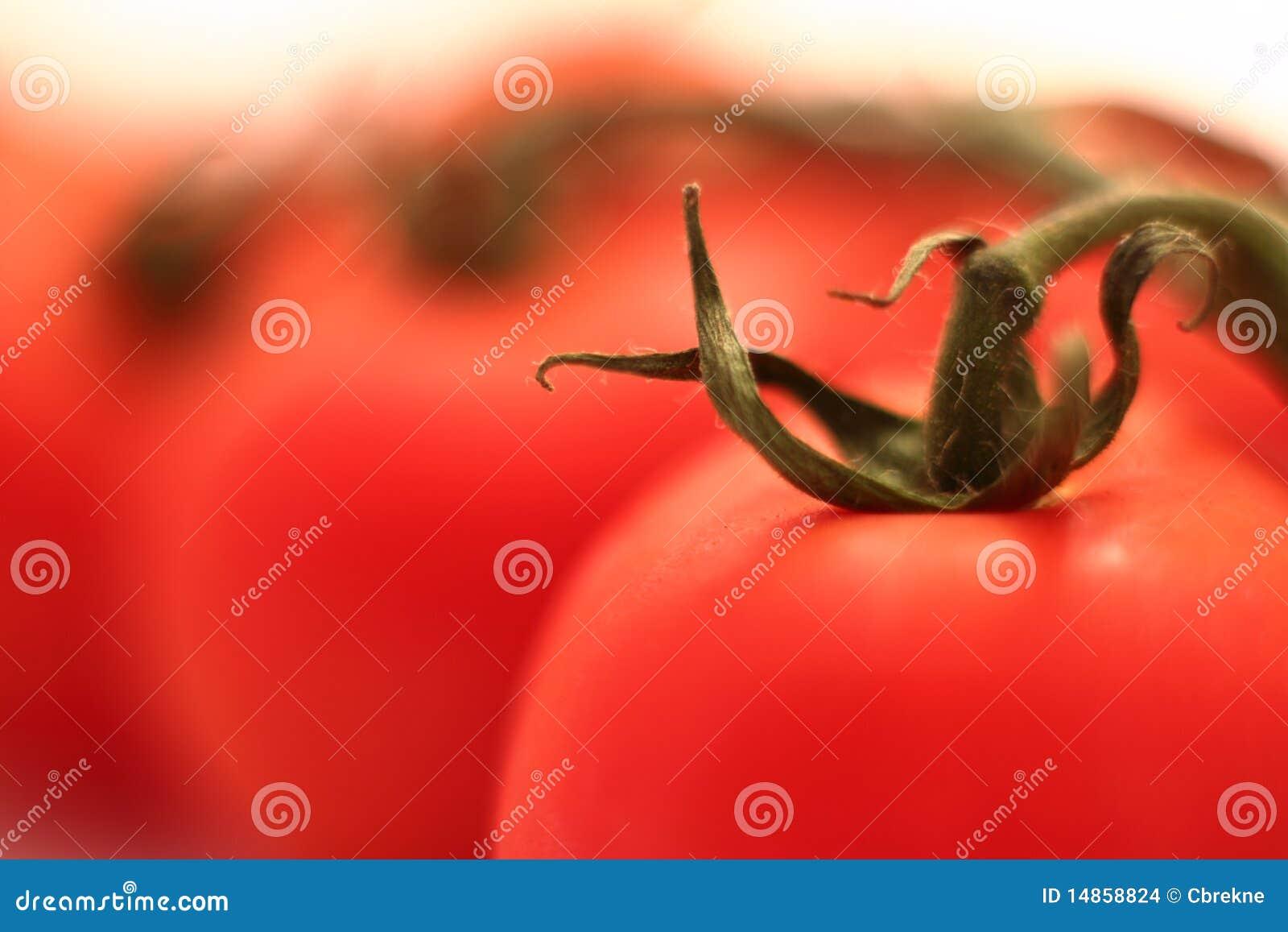 Tomato in macro