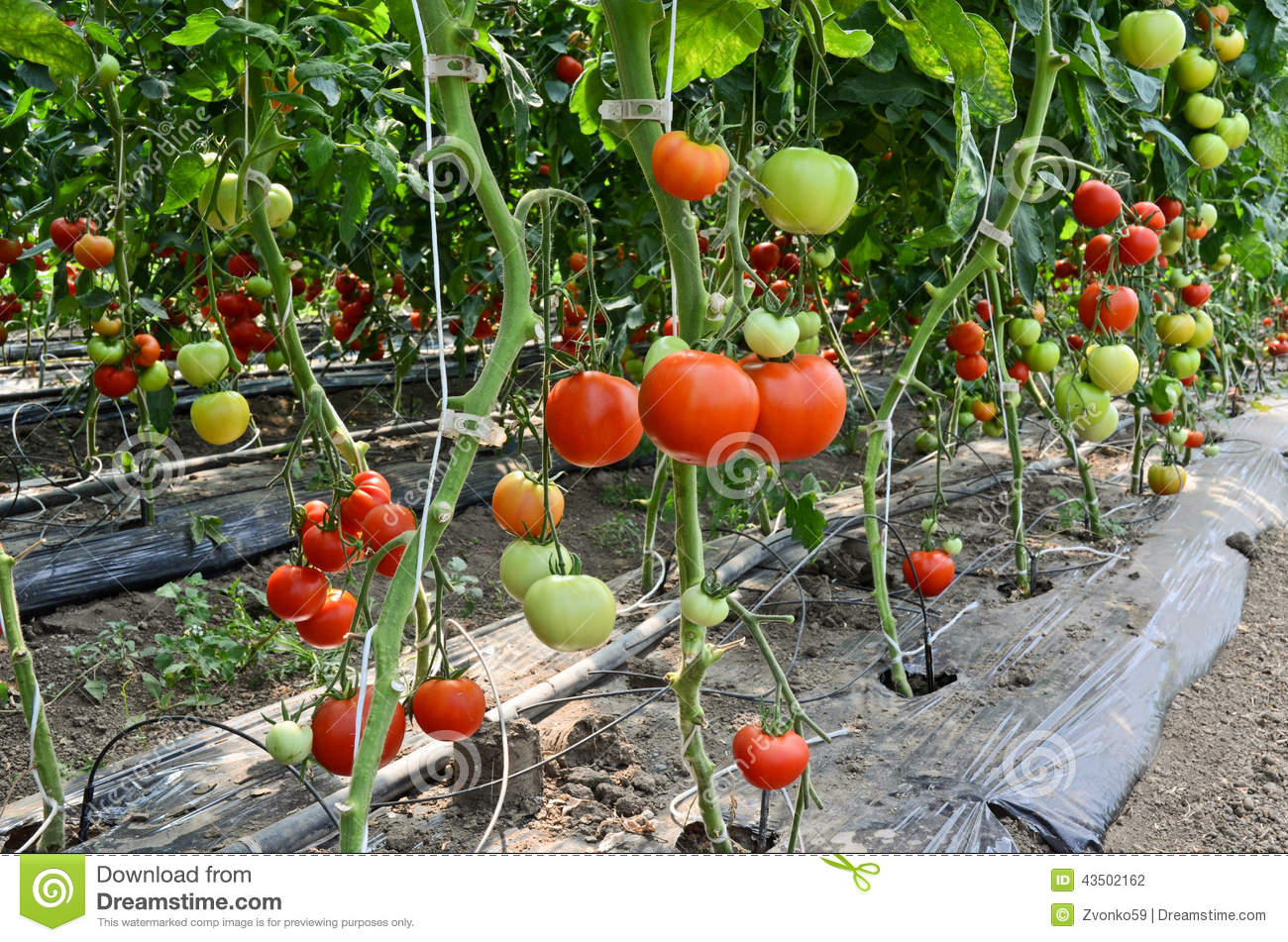 Growing vegetables in a greenhouse business plan