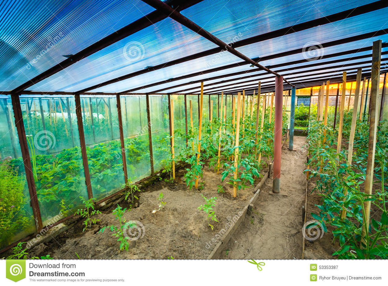 Tomato Plant Raised Beds In Vegetable Garden Stock Image