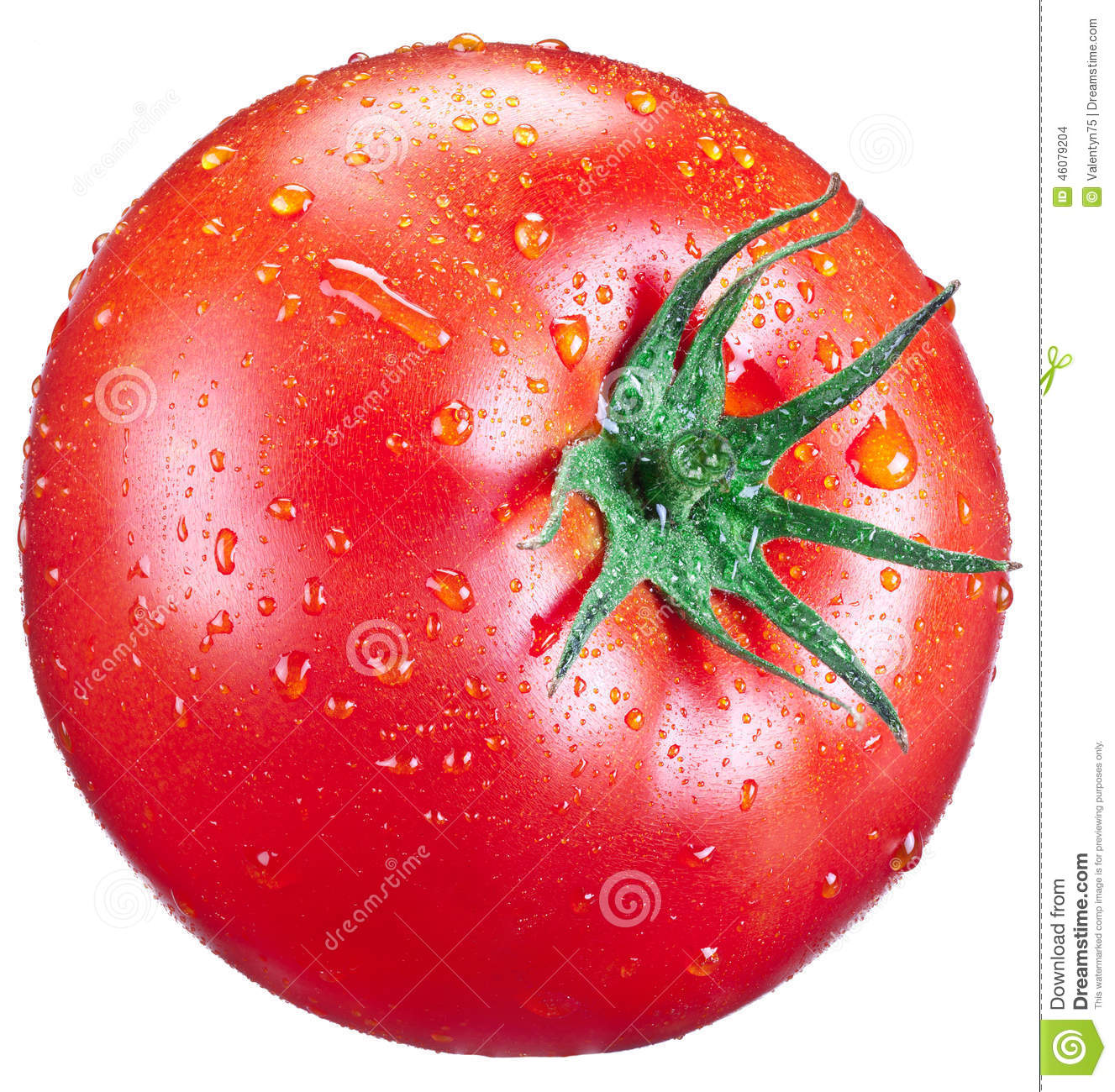Download Tomato with water drops. stock photo. Image of water - 46079204