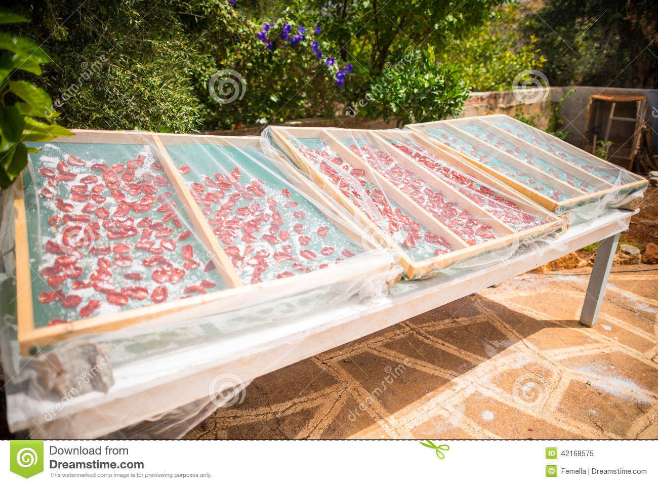tomatoes drying under the sun stock photo image 42168575. Black Bedroom Furniture Sets. Home Design Ideas