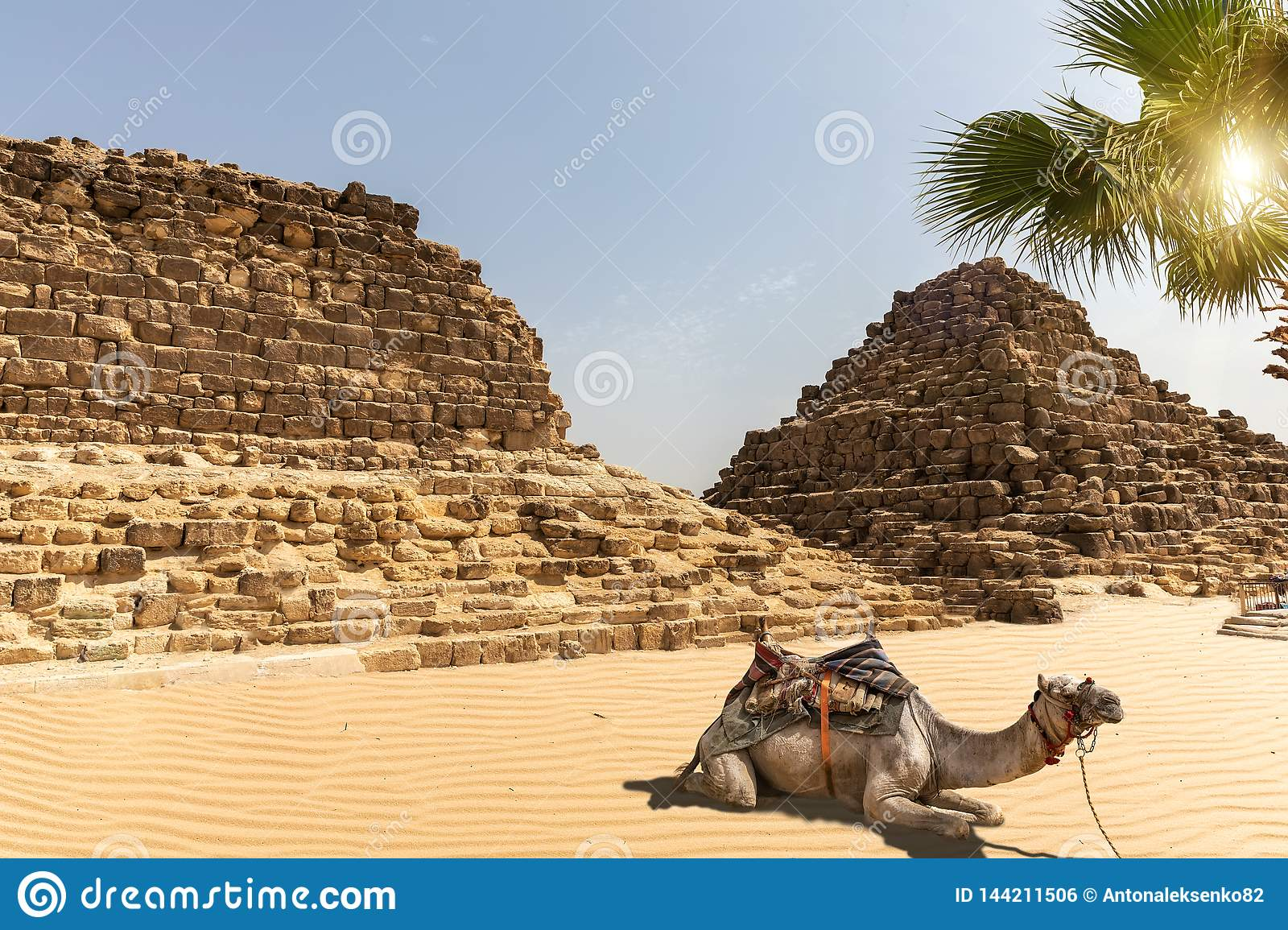 Tombs in Giza and a camel next to them, Egypt
