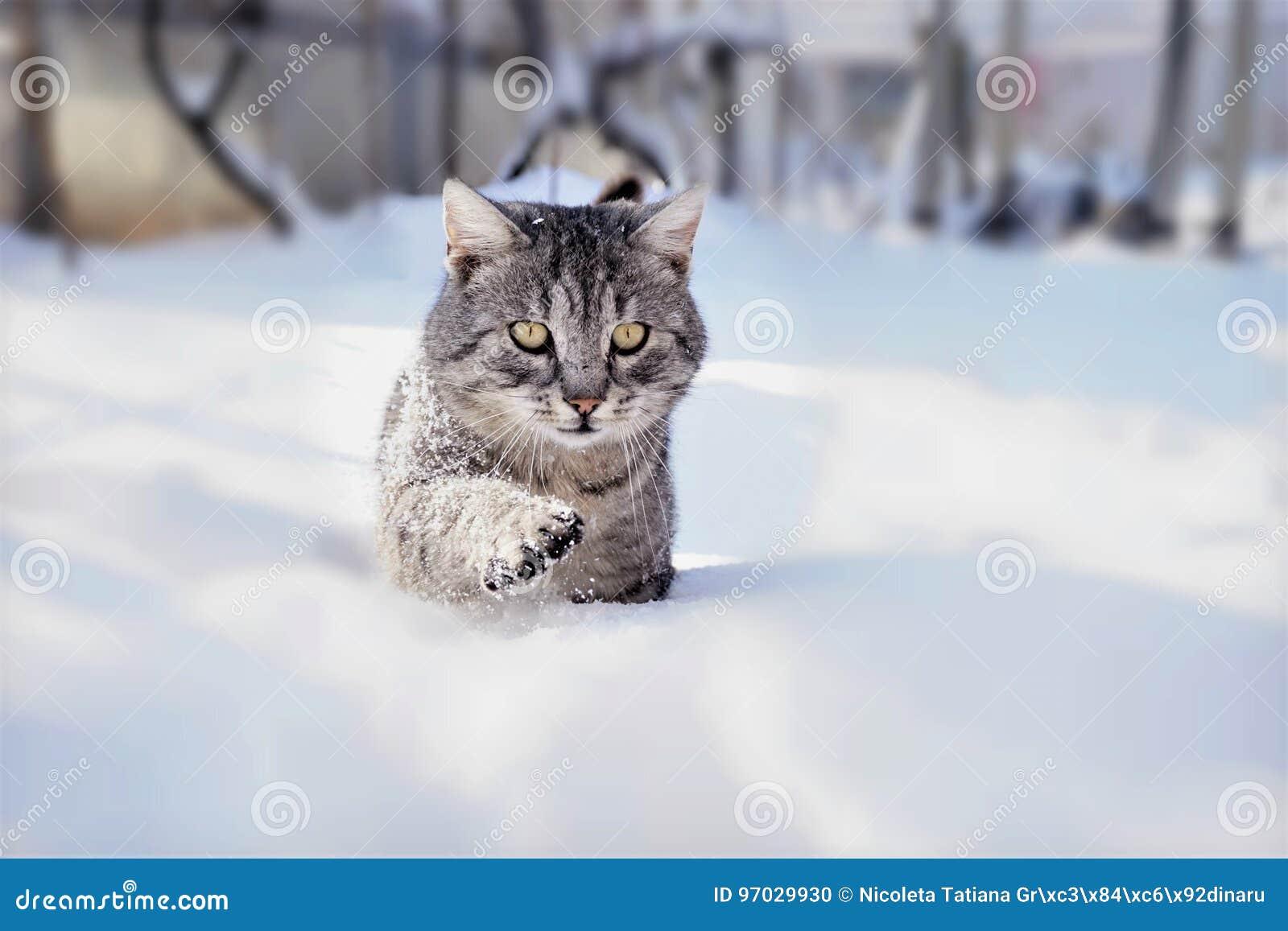 Tomcat in de sneeuw
