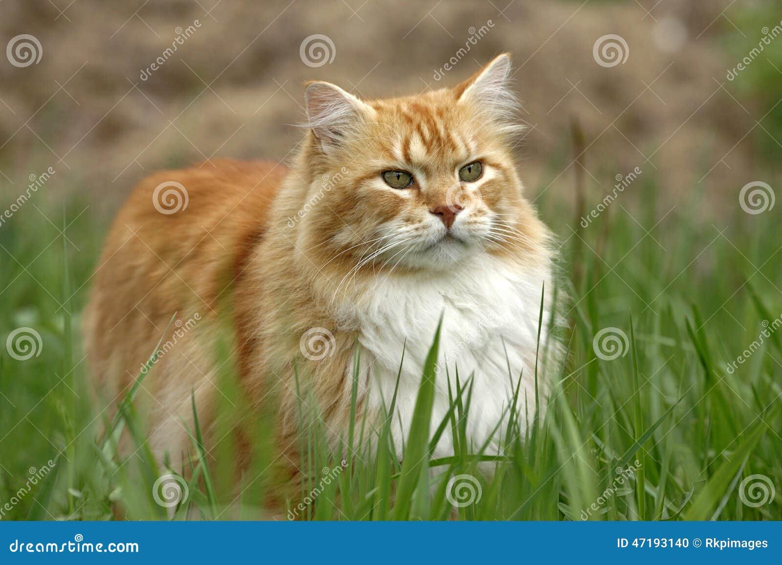 Tomcat dopatrywania ptak