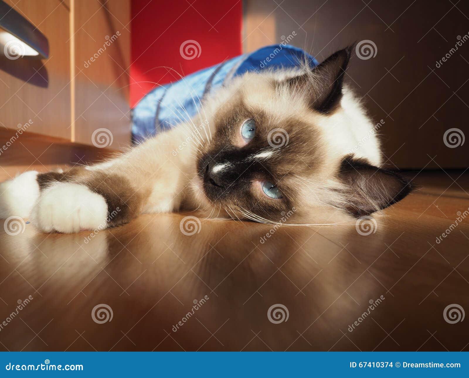 Tomcat Riky