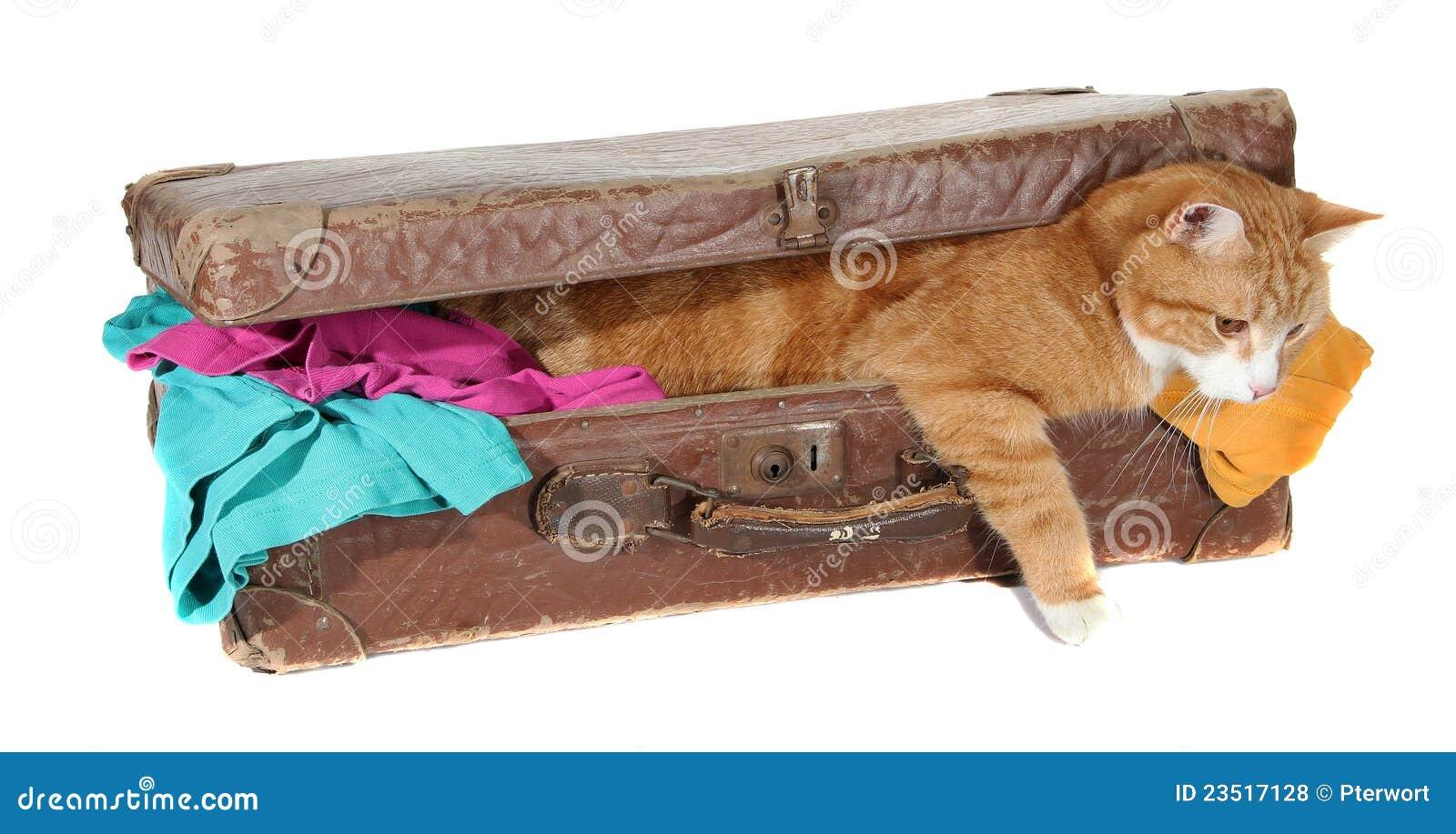 Tomcat Snoopy dans la vieille valise avec des vêtements