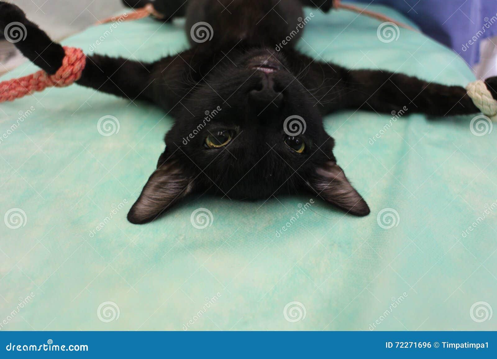 Tomcat w anestezi - weterynaryjna operacja