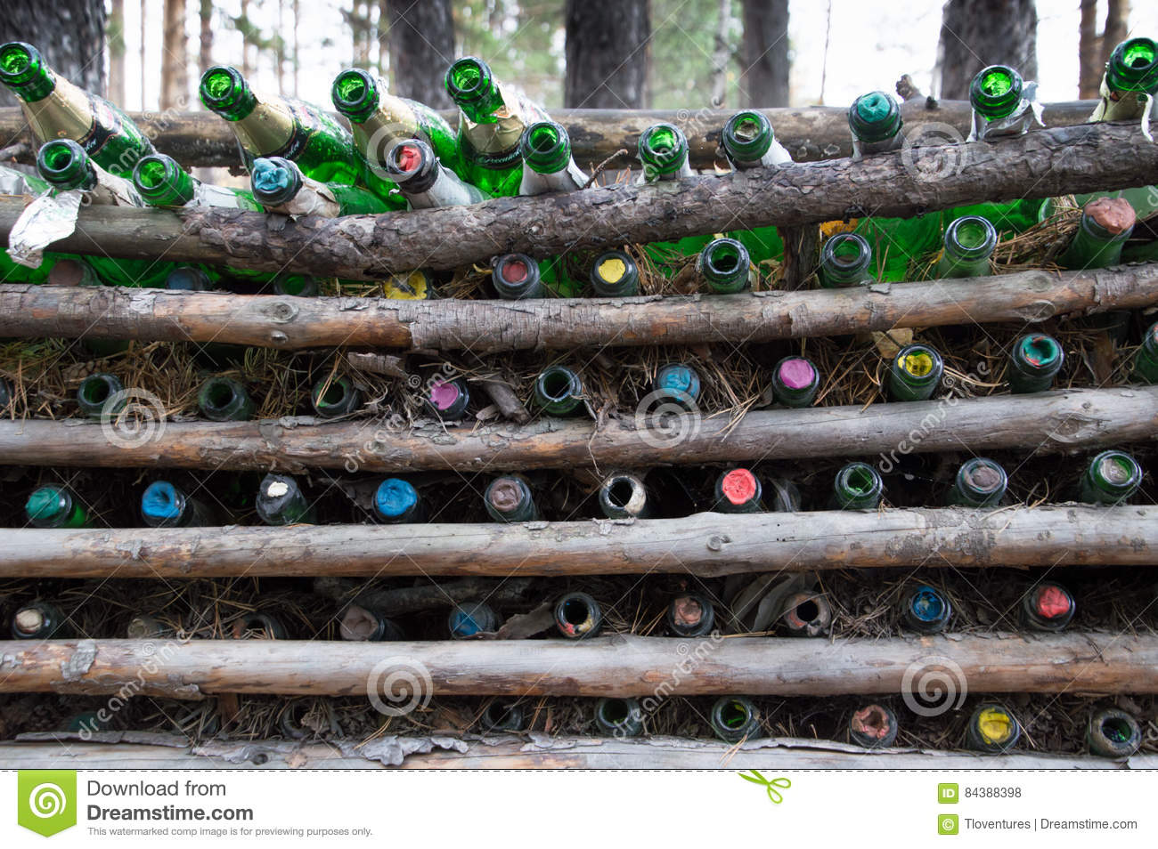 Tomma Champagne Bottles Between Pine Logs