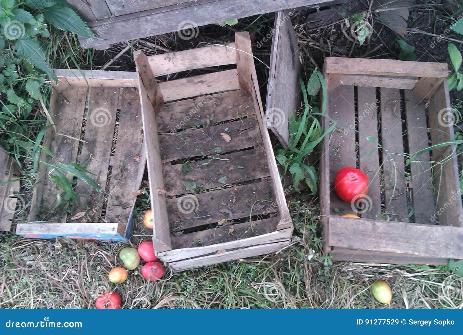 Tomma träaskar och äpplen i gräs