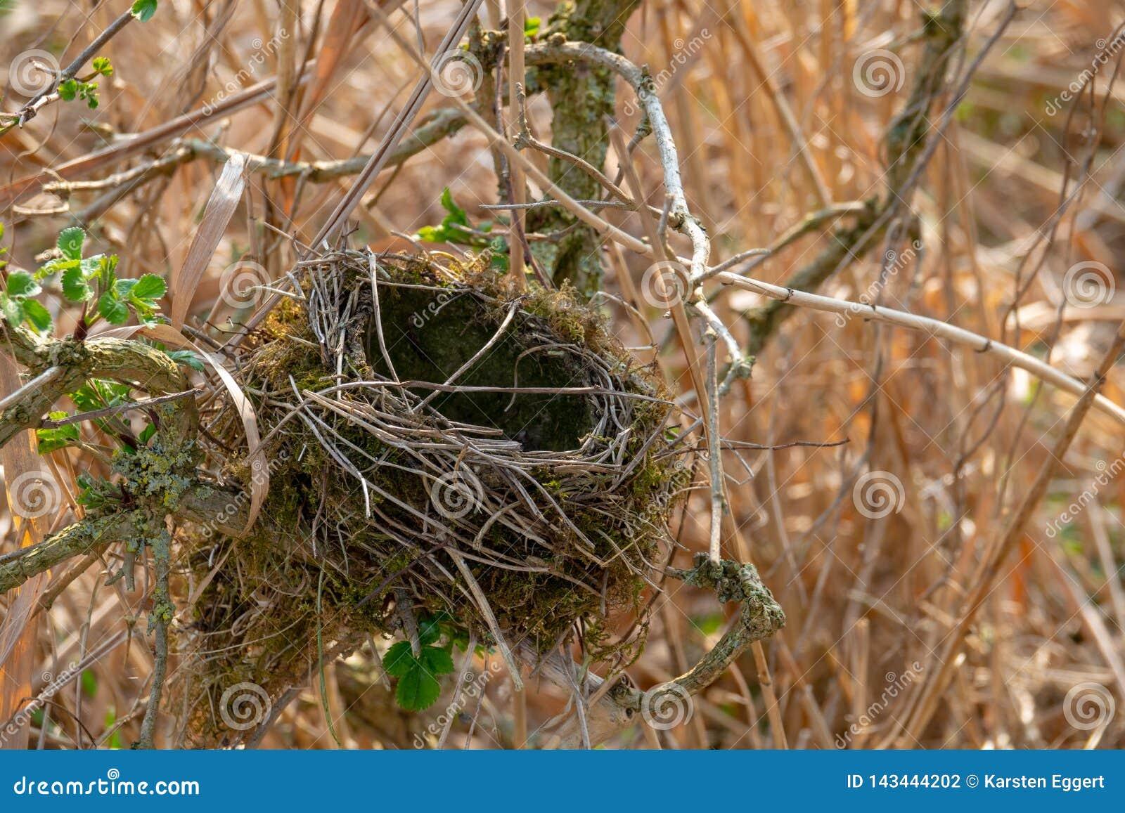 Tomt fågelbo i en buske