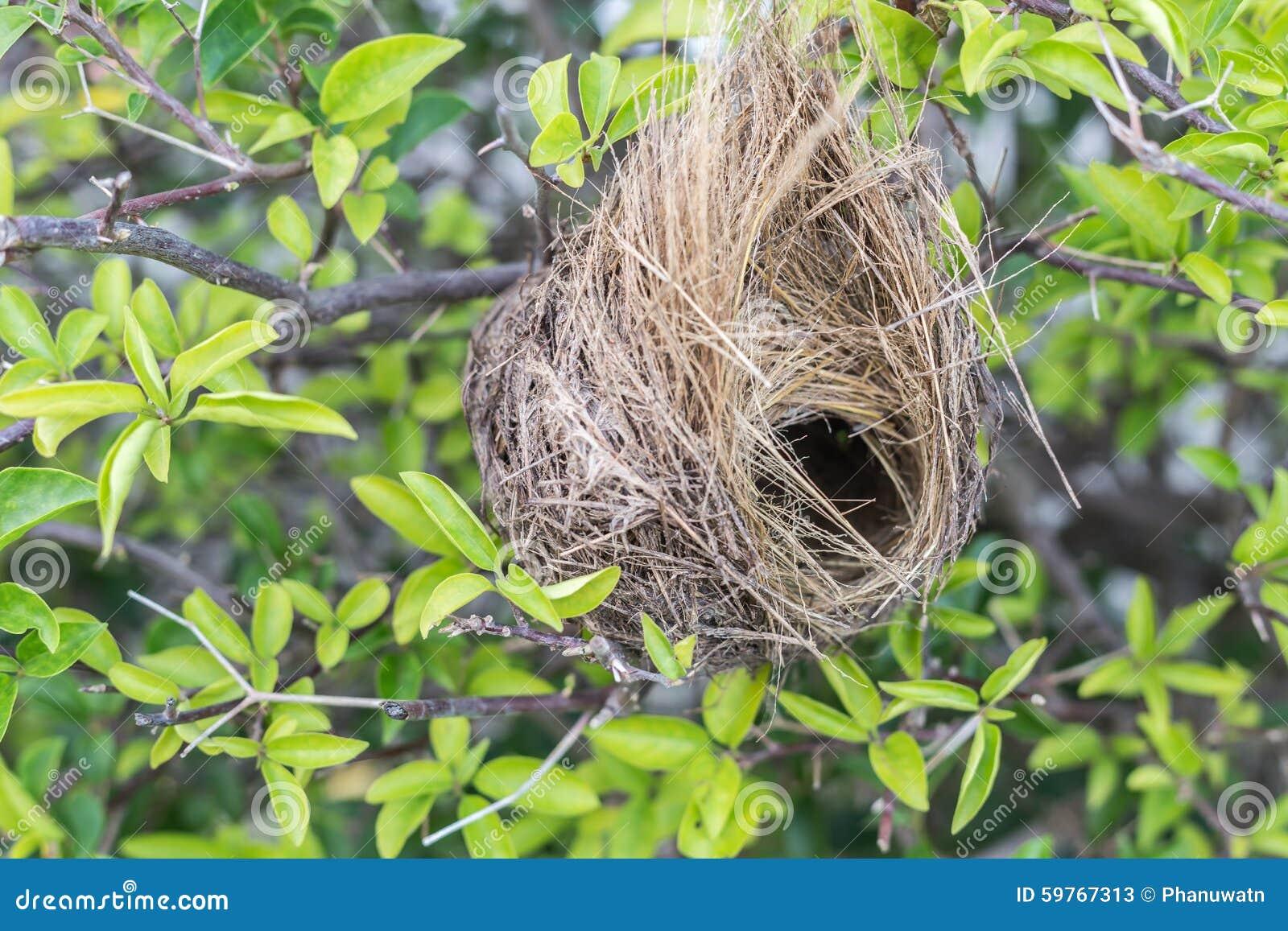 Tomt fågelrede på träd