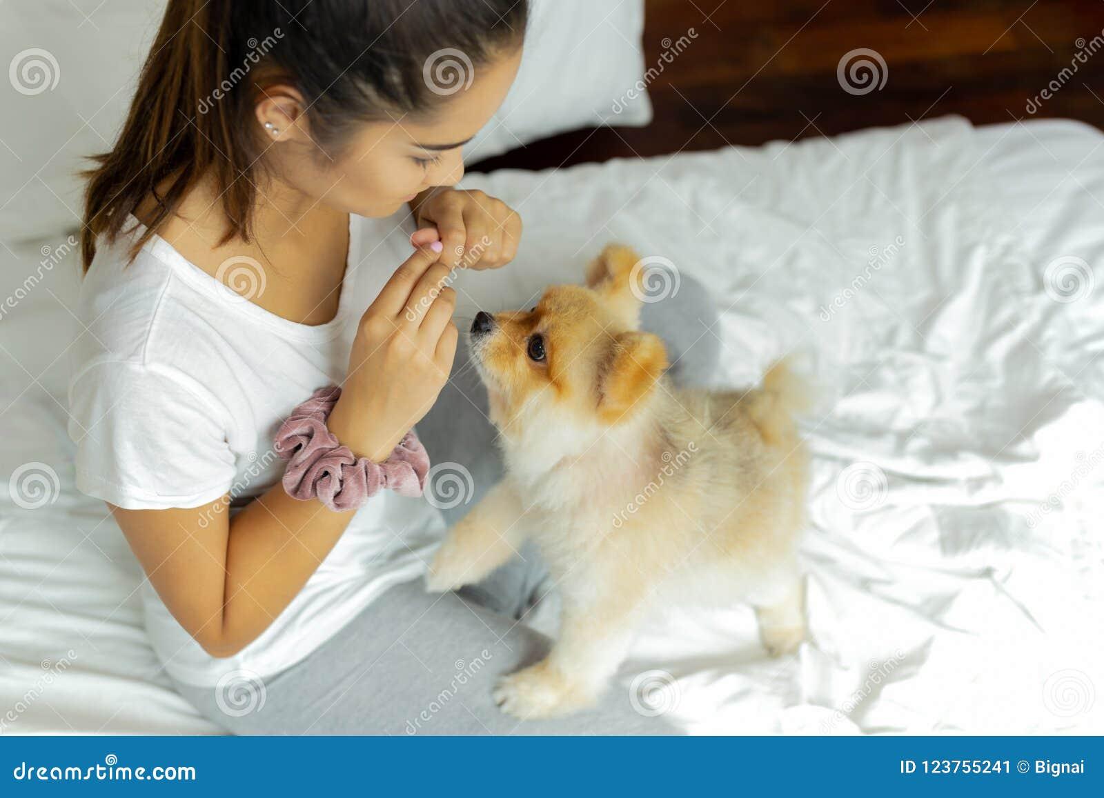 Tonårs- flicka för blandat lopp som undervisar den pomeranian hunden att göra ett trick på sängen