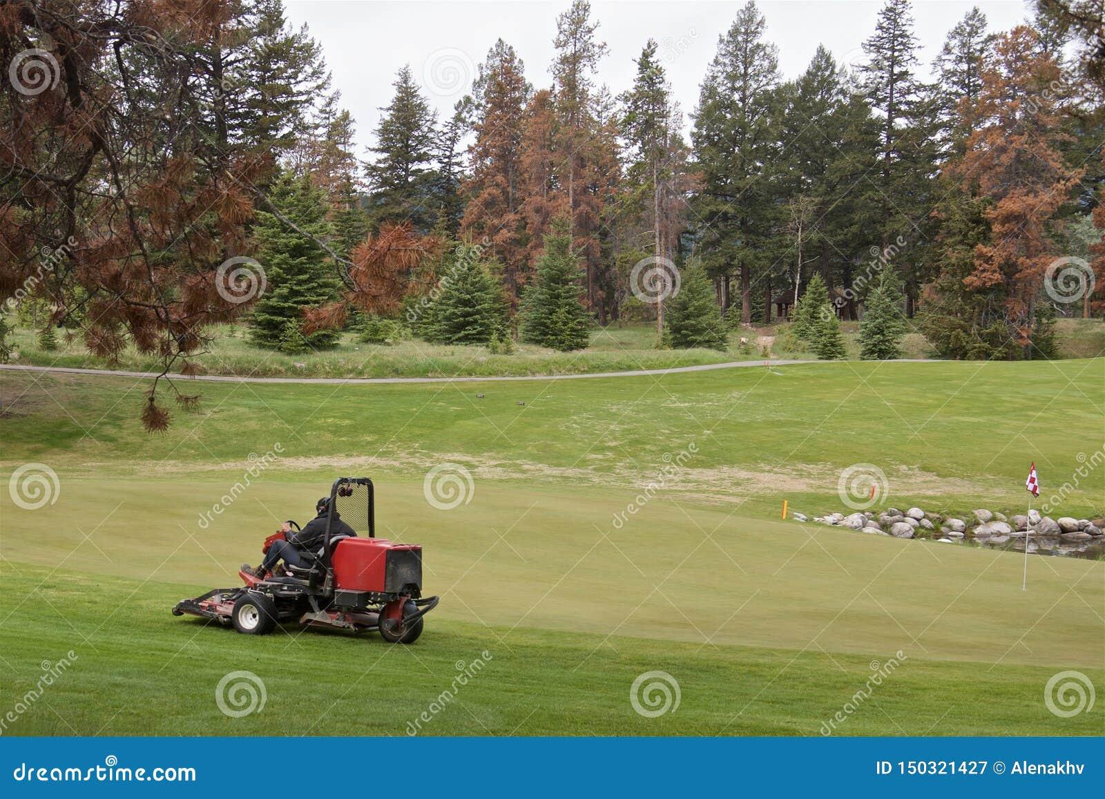 Tondeuse à gazon sur le terrain de golf entouré par la forêt conifére