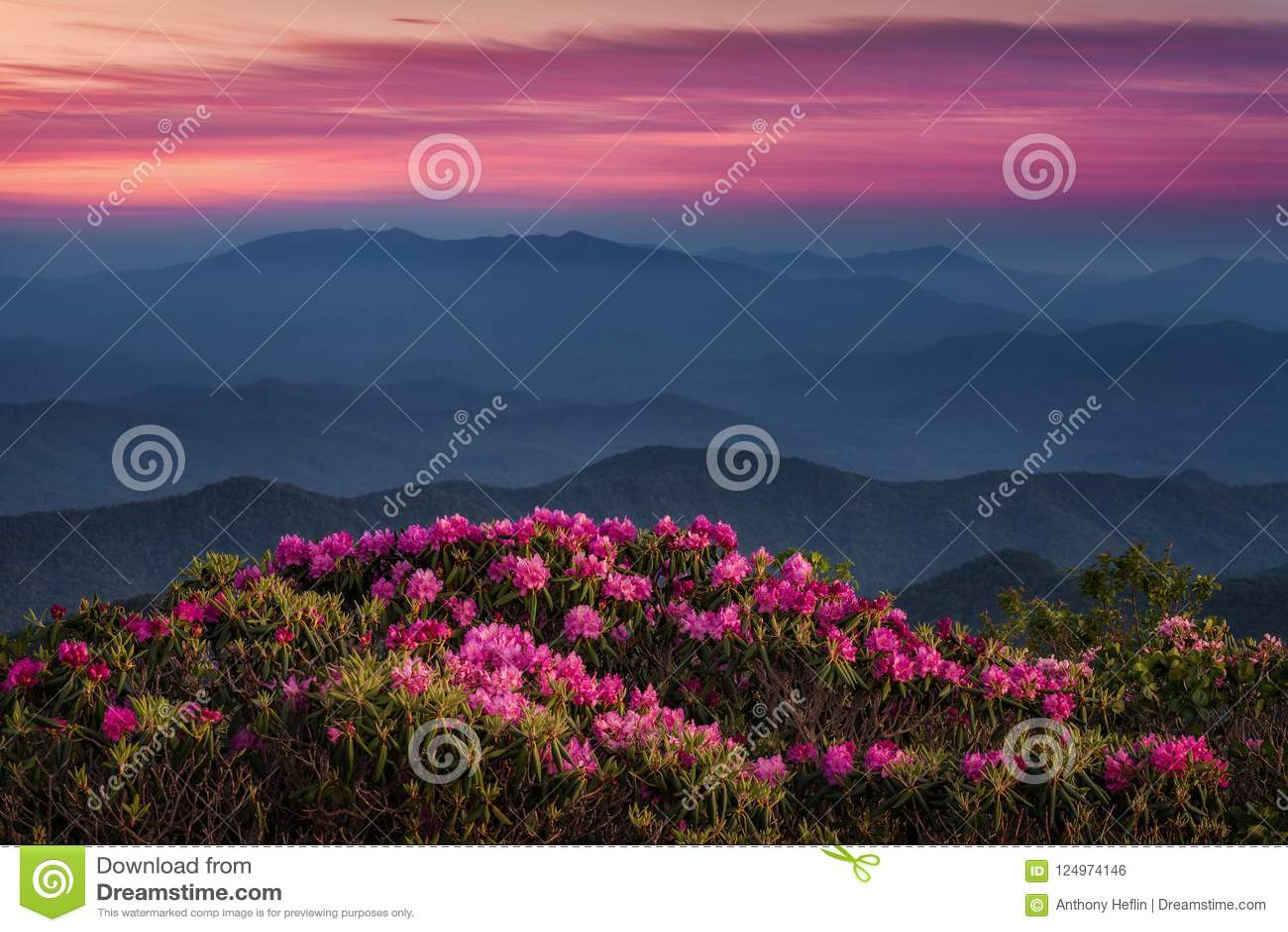 Toneelzonsondergang, Catawba-Rododendron, Appalachian Bergen