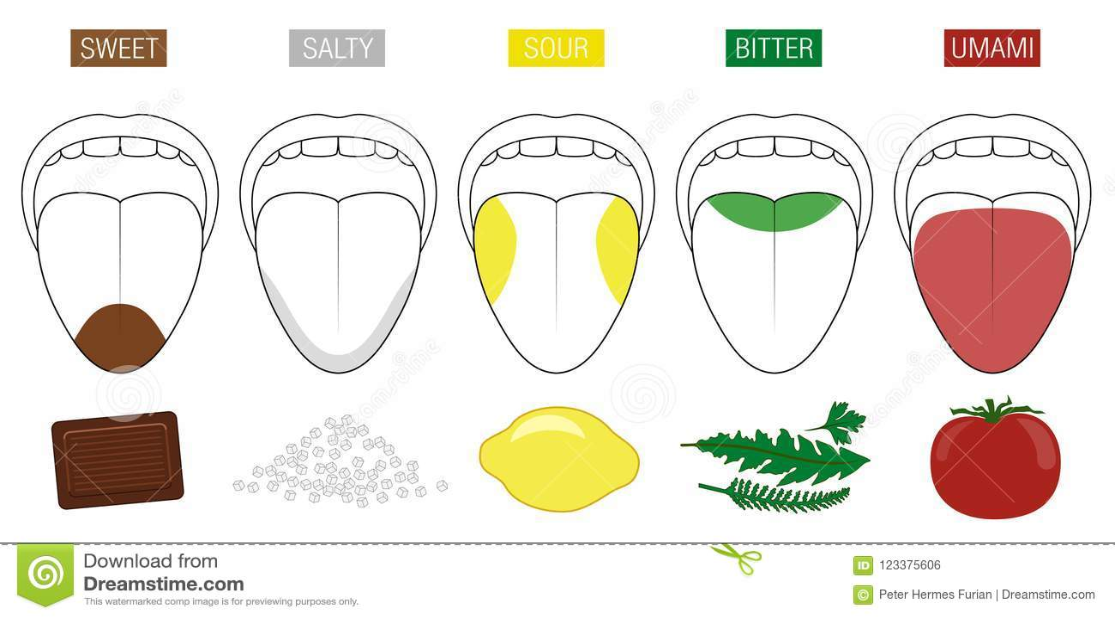 Tongue Taste Areas Food Illustration Stock Vector ...