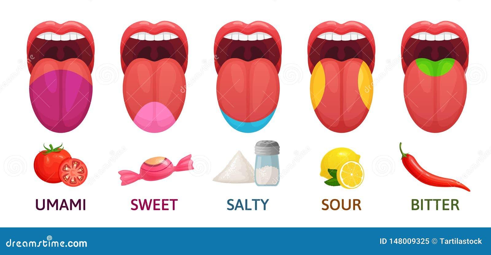 Tongue Taste Areas  Sweet, Bitter And Salty Tastes  Umami