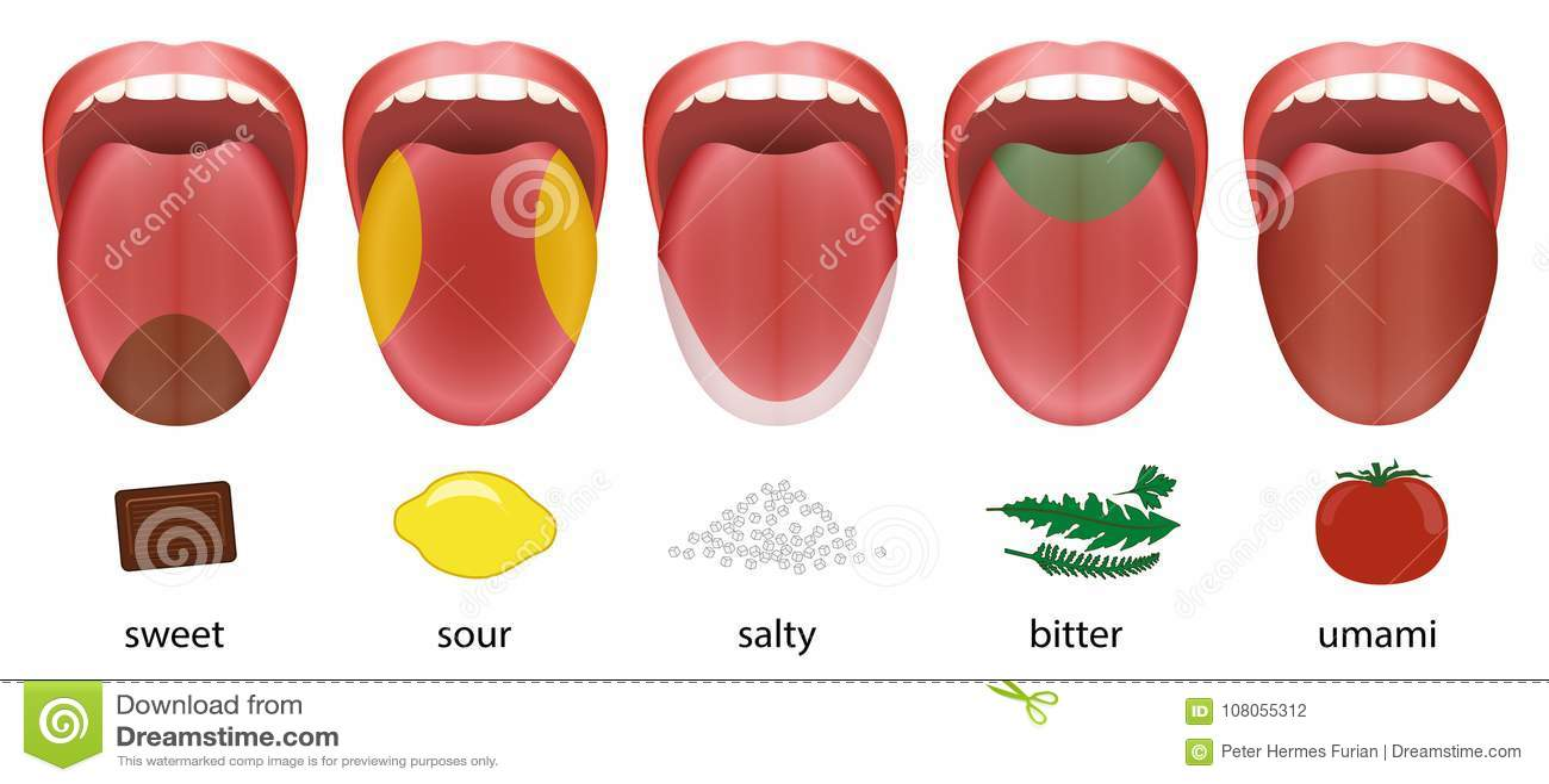 Tongue Taste Areas Sweet Sour Salty Bitter Umami