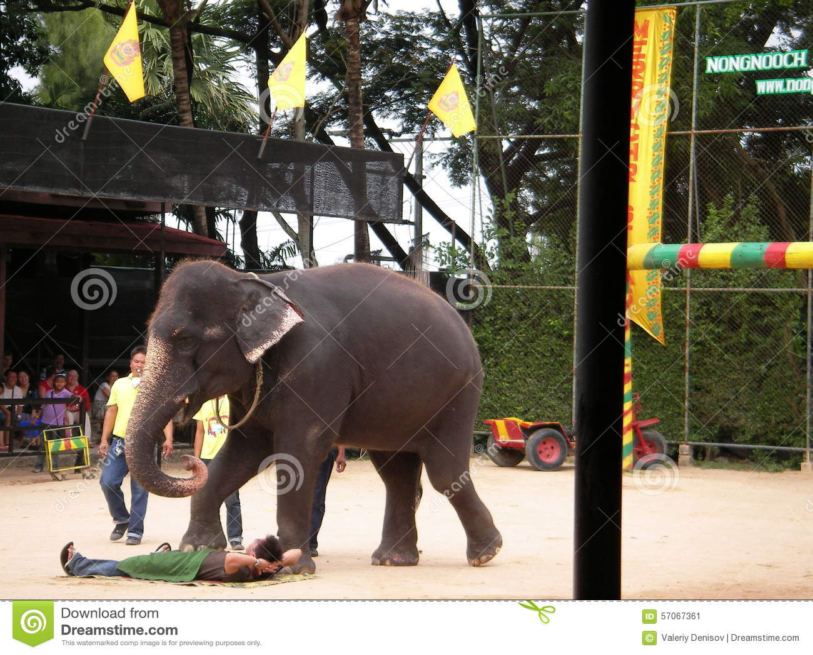 Toon van olifanten