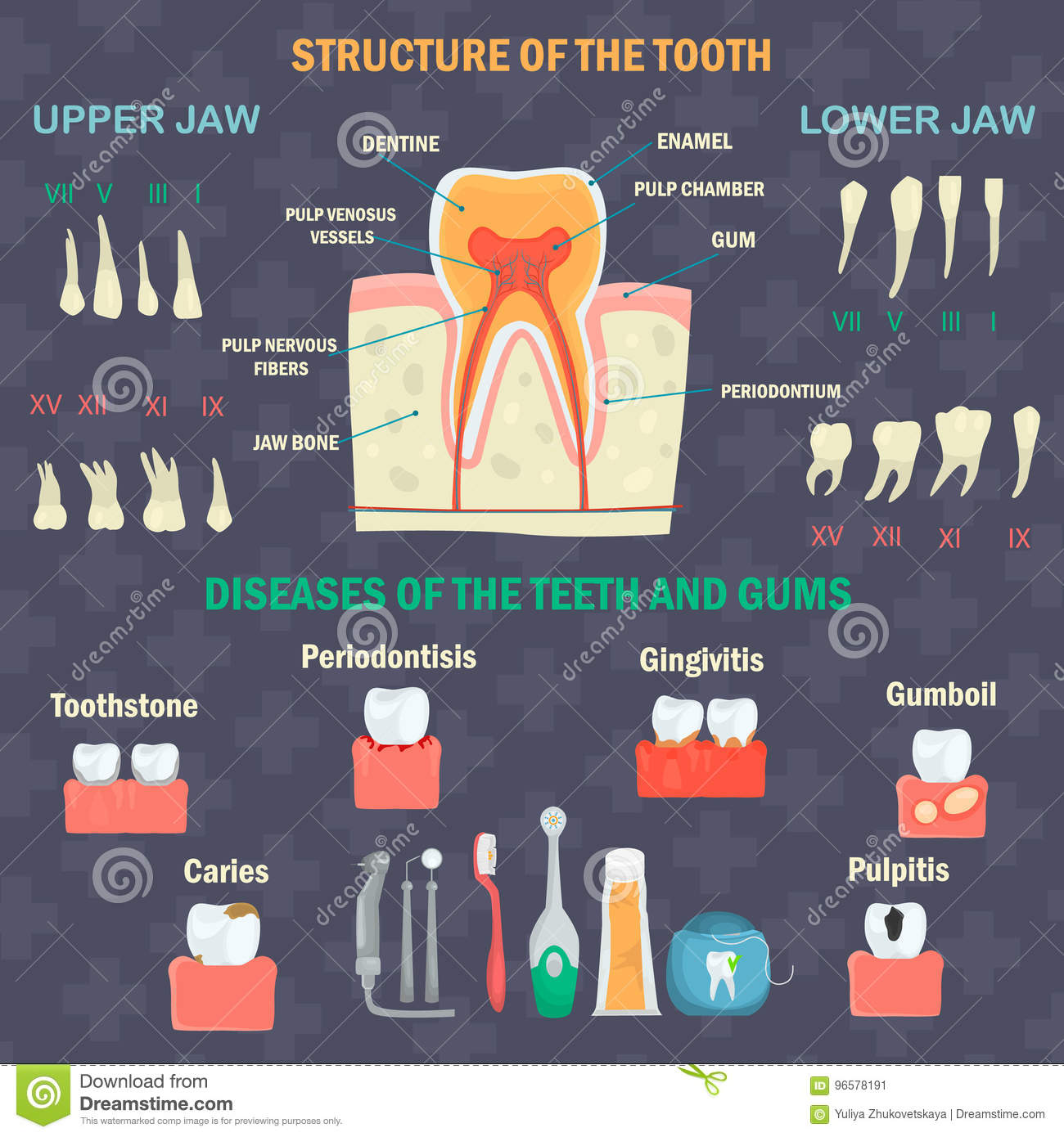 Tooth Structure Types Of Human Teeth Teeth Diseases And Hygiene