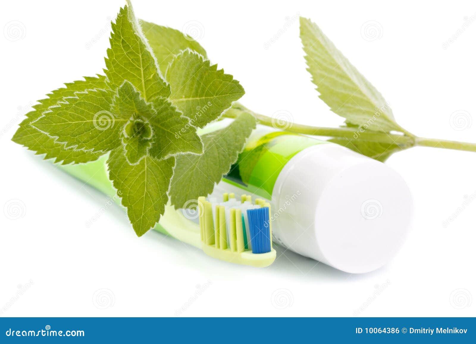 Toothbrush, dentífrico e folhas frescas da hortelã