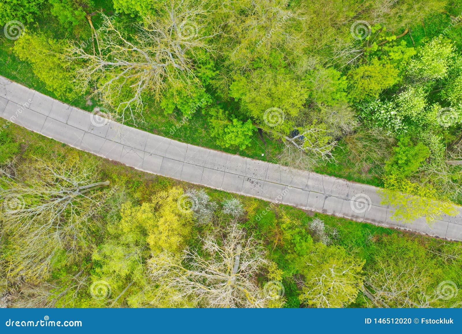 Top aéreo abajo de la opinión sobre el camino concreto quebrado viejo que pasa a través de bosque de hojas caducas verde estupend