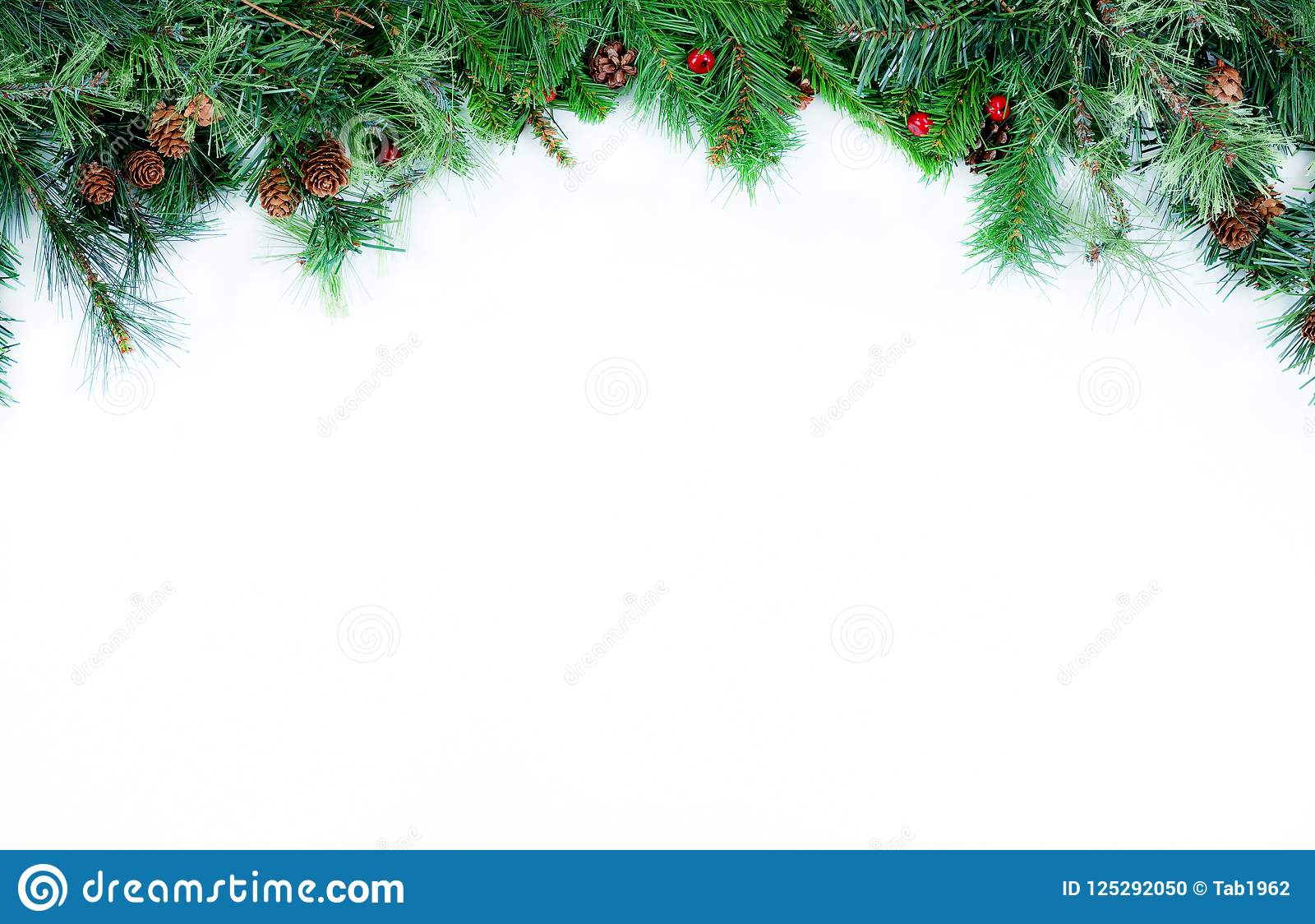 Christmas Top Border.Top Border Of Christmas Tree Evergreen Branches On A White