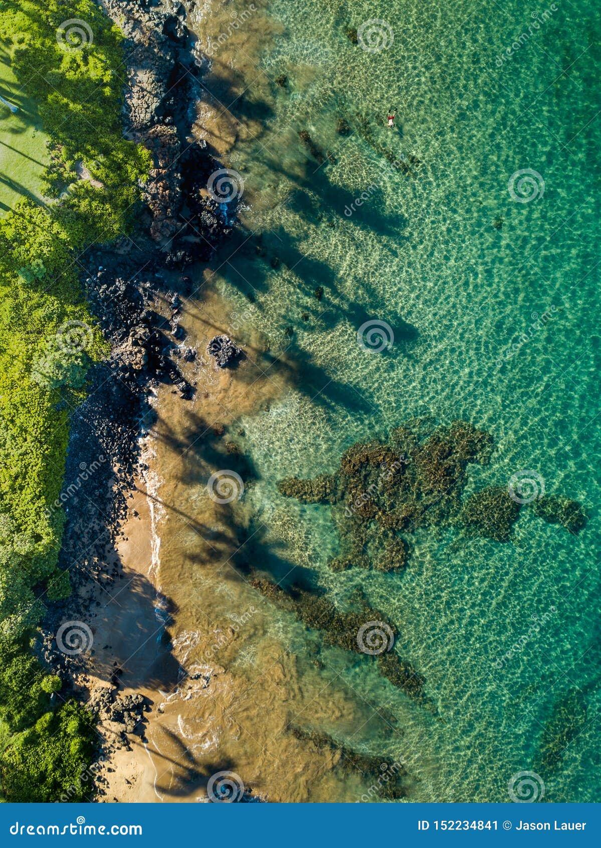 Top down mening van de kustlijn van Maui met lange palmschaduwen