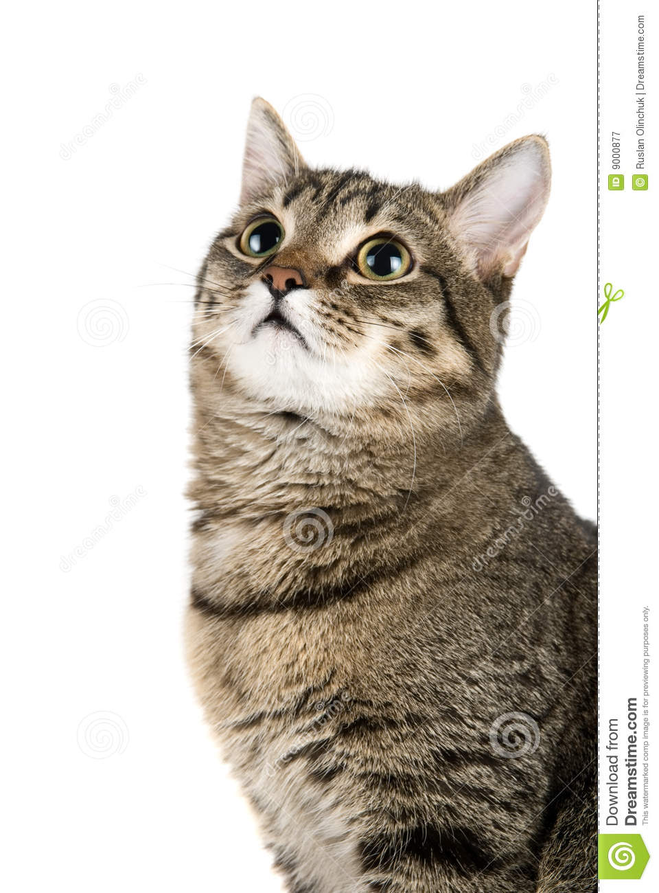 Top Looking Cat Royalty Free Stock Photography - Image ...