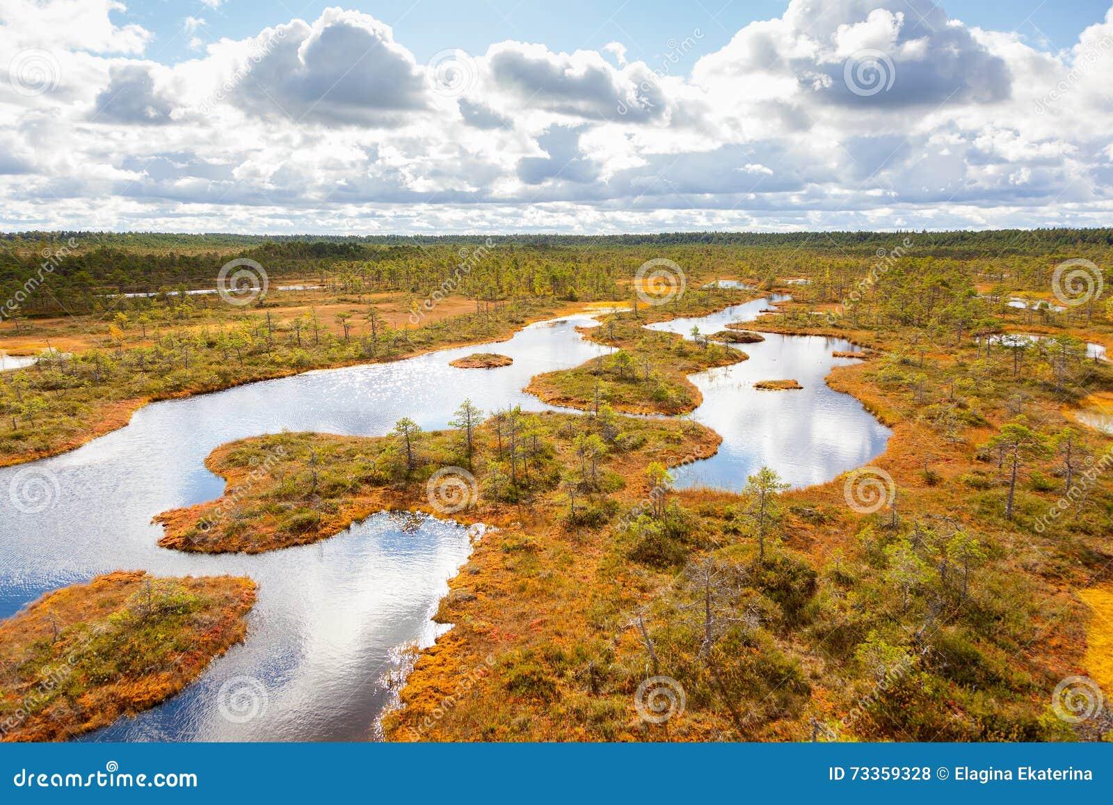 Top view of autumn landscape. Huge bog in Estonia